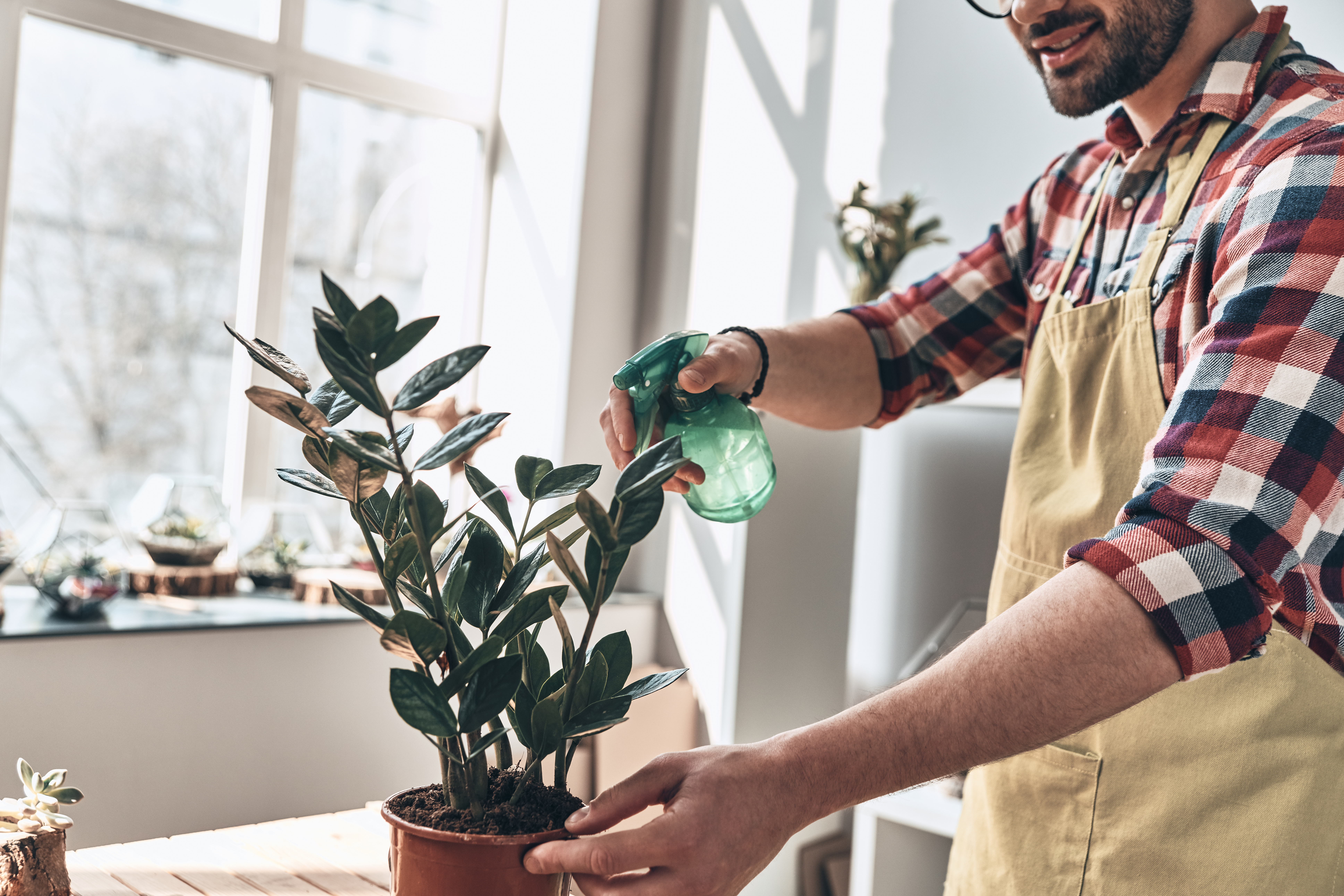 Can You Spray Plants with Alcohol? | Home Guides | SF Gate  Best Houseplants Html on replanting houseplants, easy houseplants, beautiful houseplants,