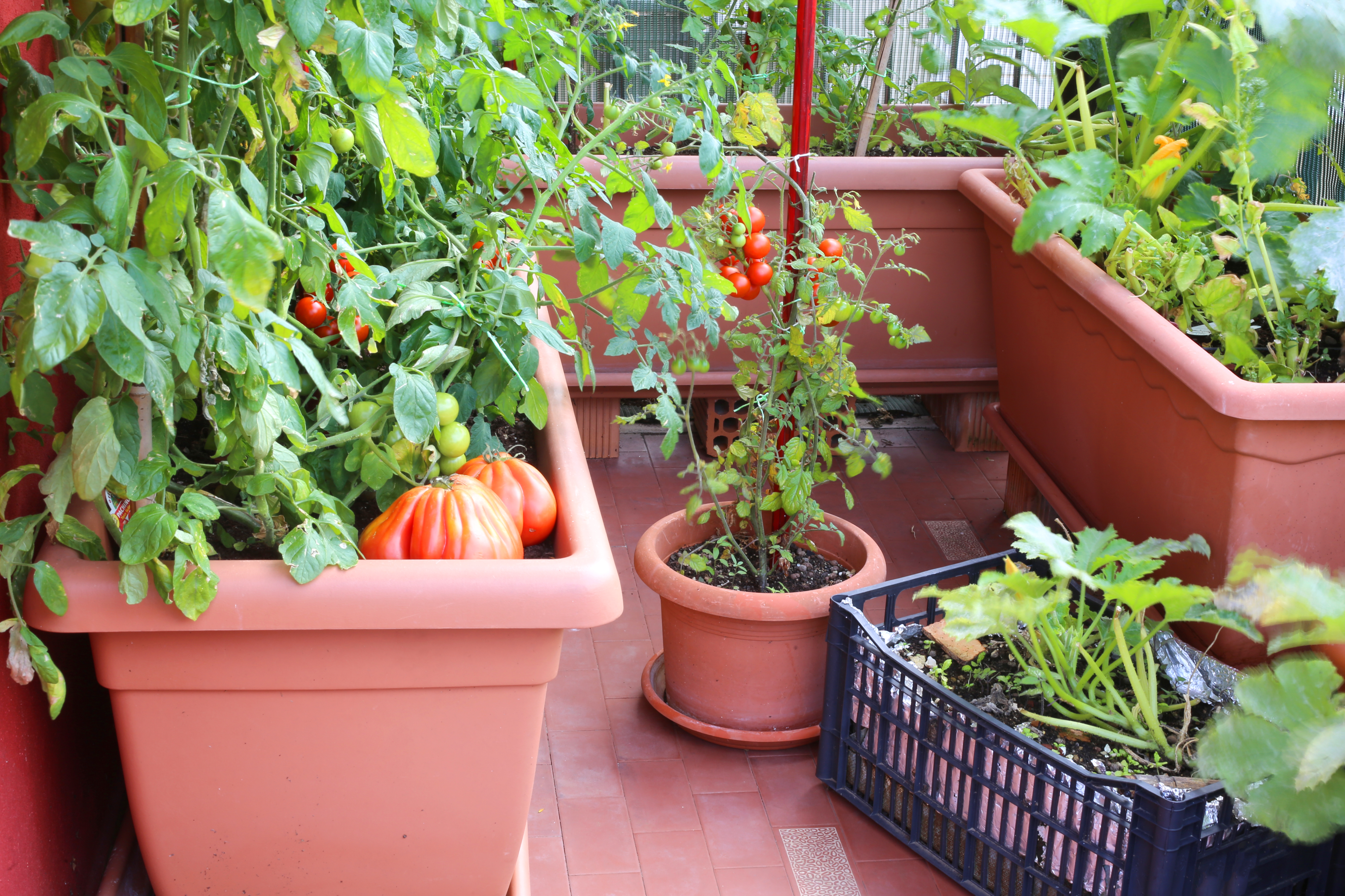 How To Grow Zucchini In Pots Home Guides Sf Gate
