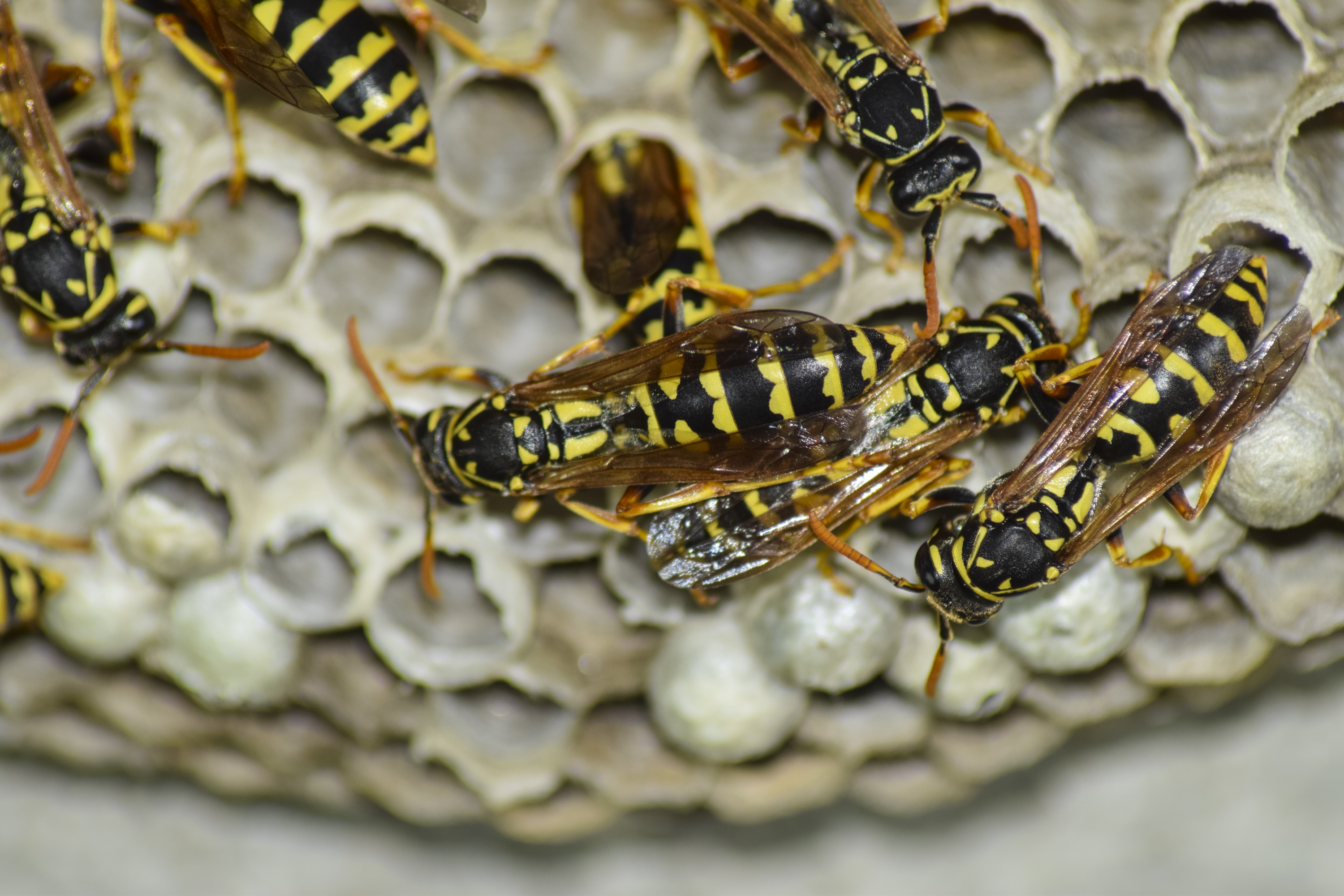 How to Kill a Yellow Jacket Colony in the Ground | Home Guides | SF Gate
