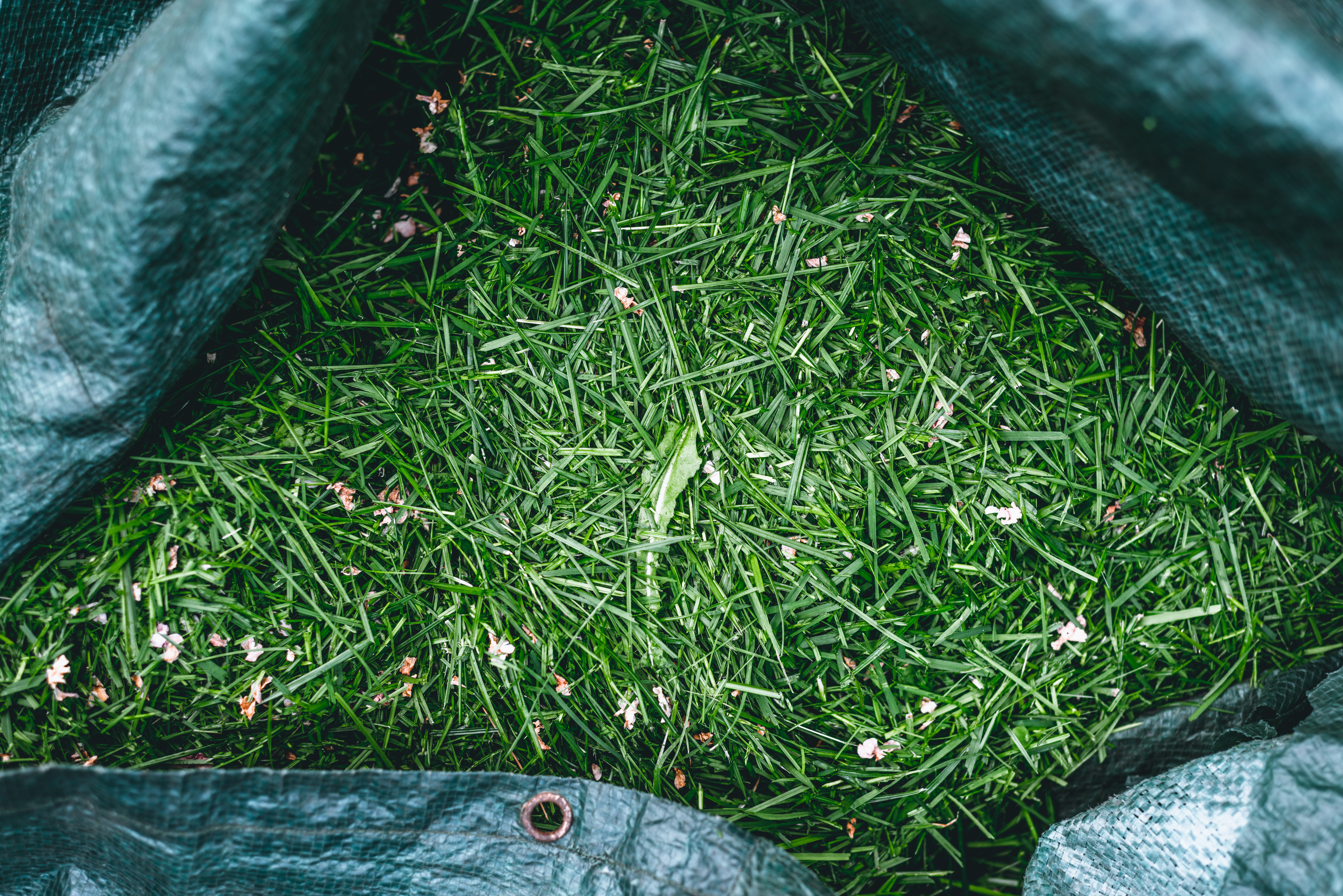 Mulching The Lawn Vs Bagging The Grass Home Guides Sf Gate
