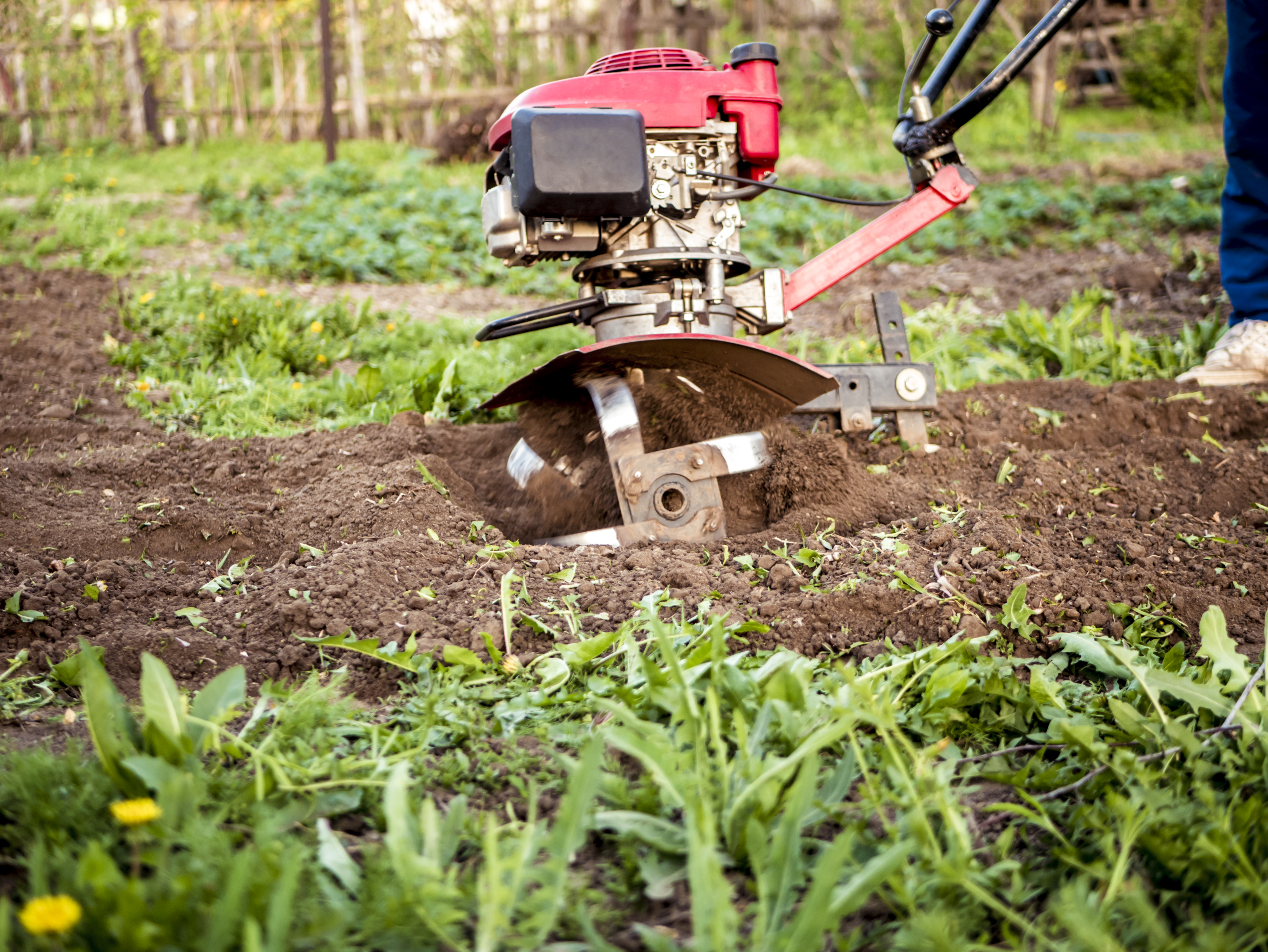 How to Rototill a Lawn | Home Guides | SF Gate