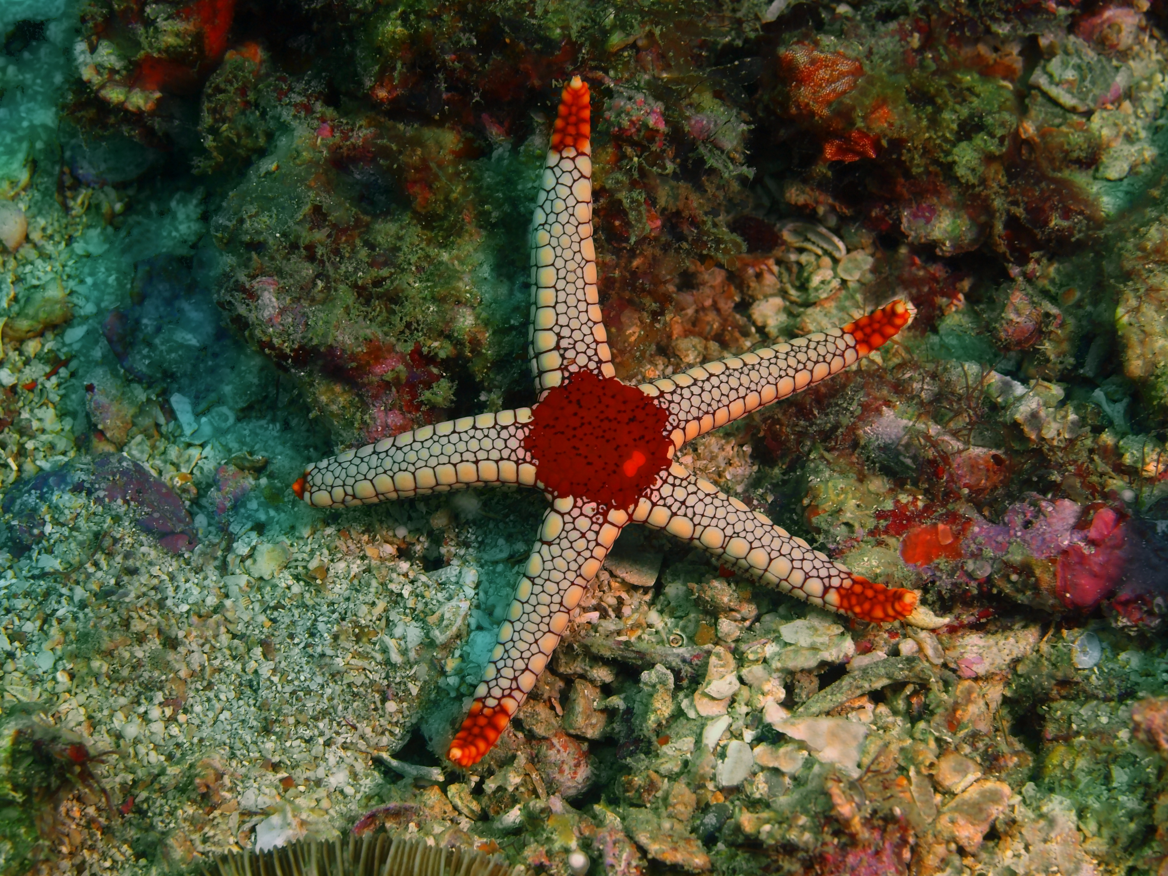 What Are Some Ways Starfish Adapt to Their Environment? | Sciencing