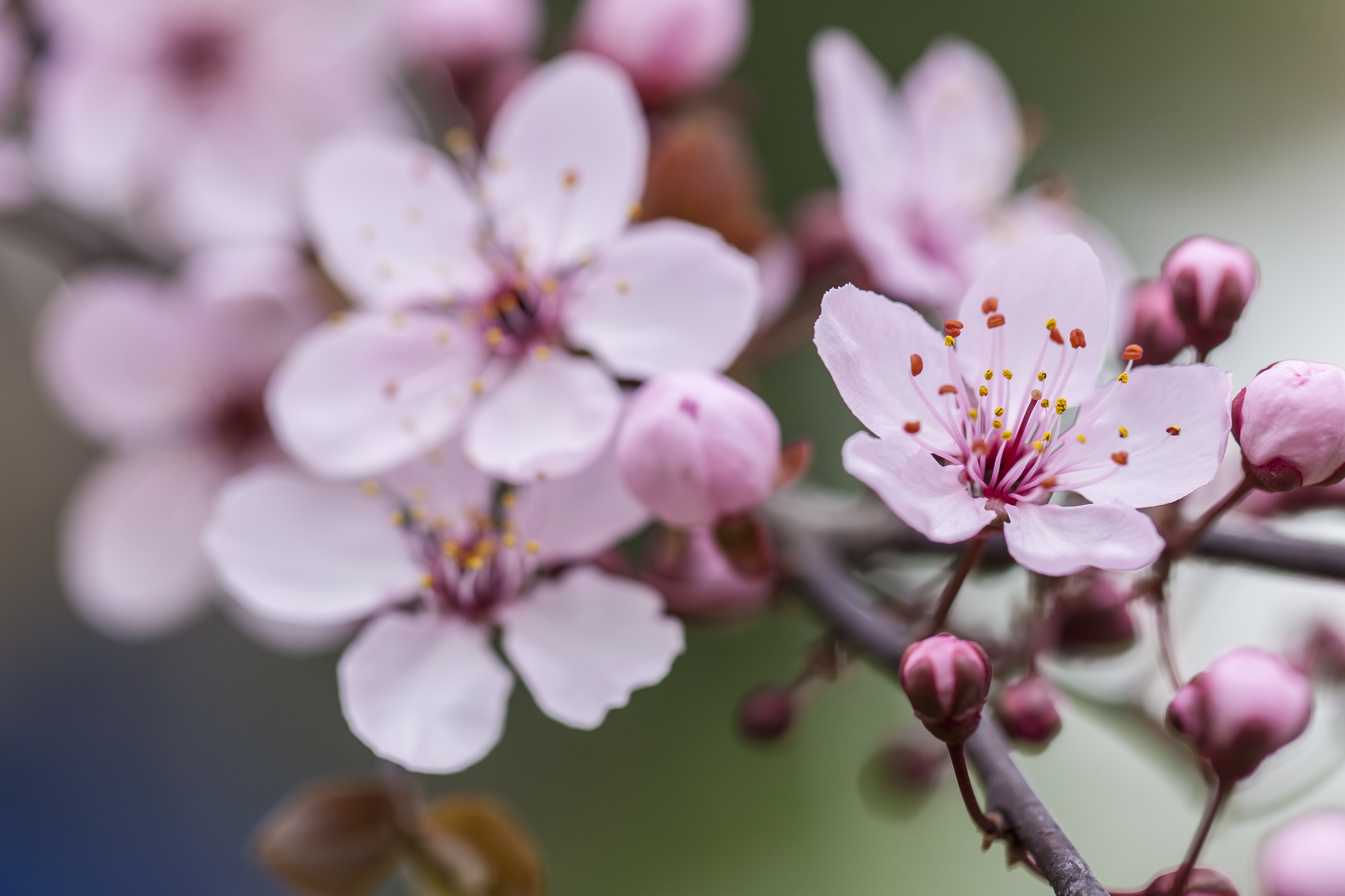 How To Tell If Your Cherry Tree Is Dead