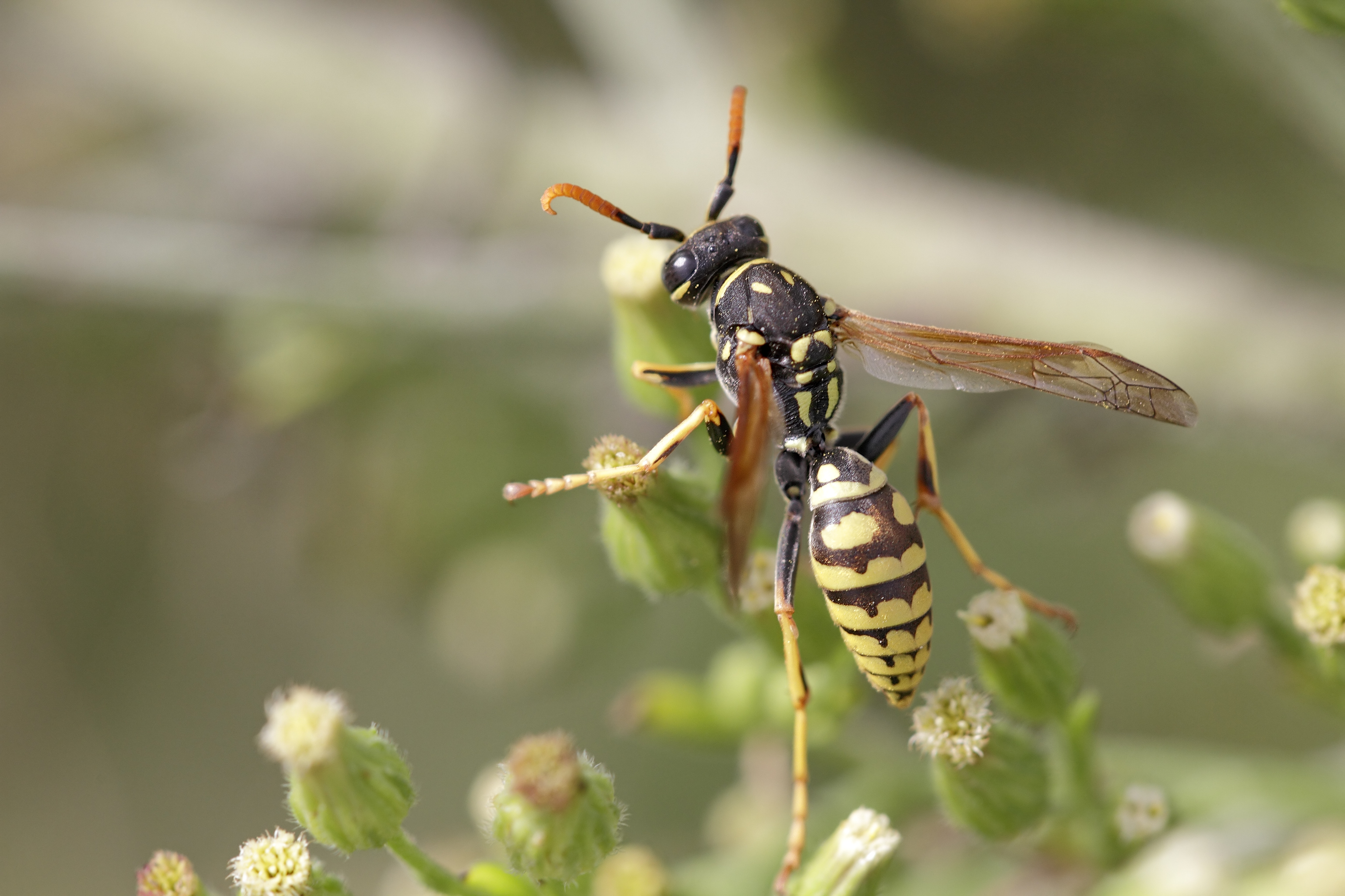 Types Of Wasps That Are Very Aggressive