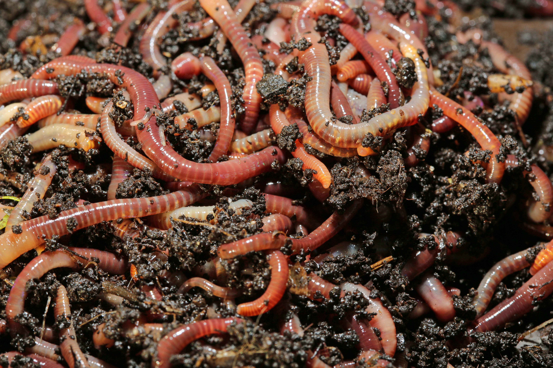 Will Vinegar Kill Garden Worms Home Guides Sf Gate