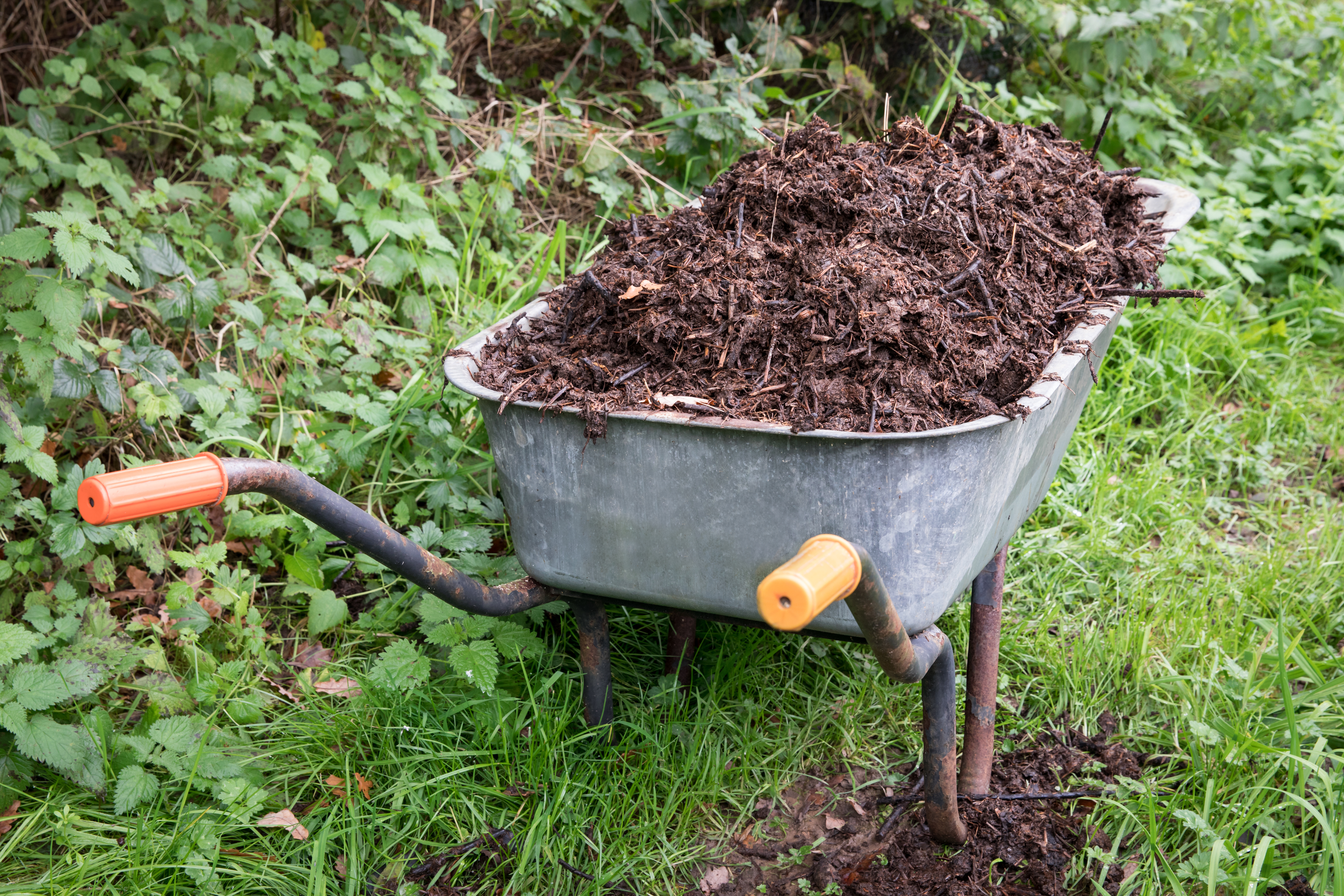 How to Control Ants in a Compost Pile | Home Guides | SF Gate