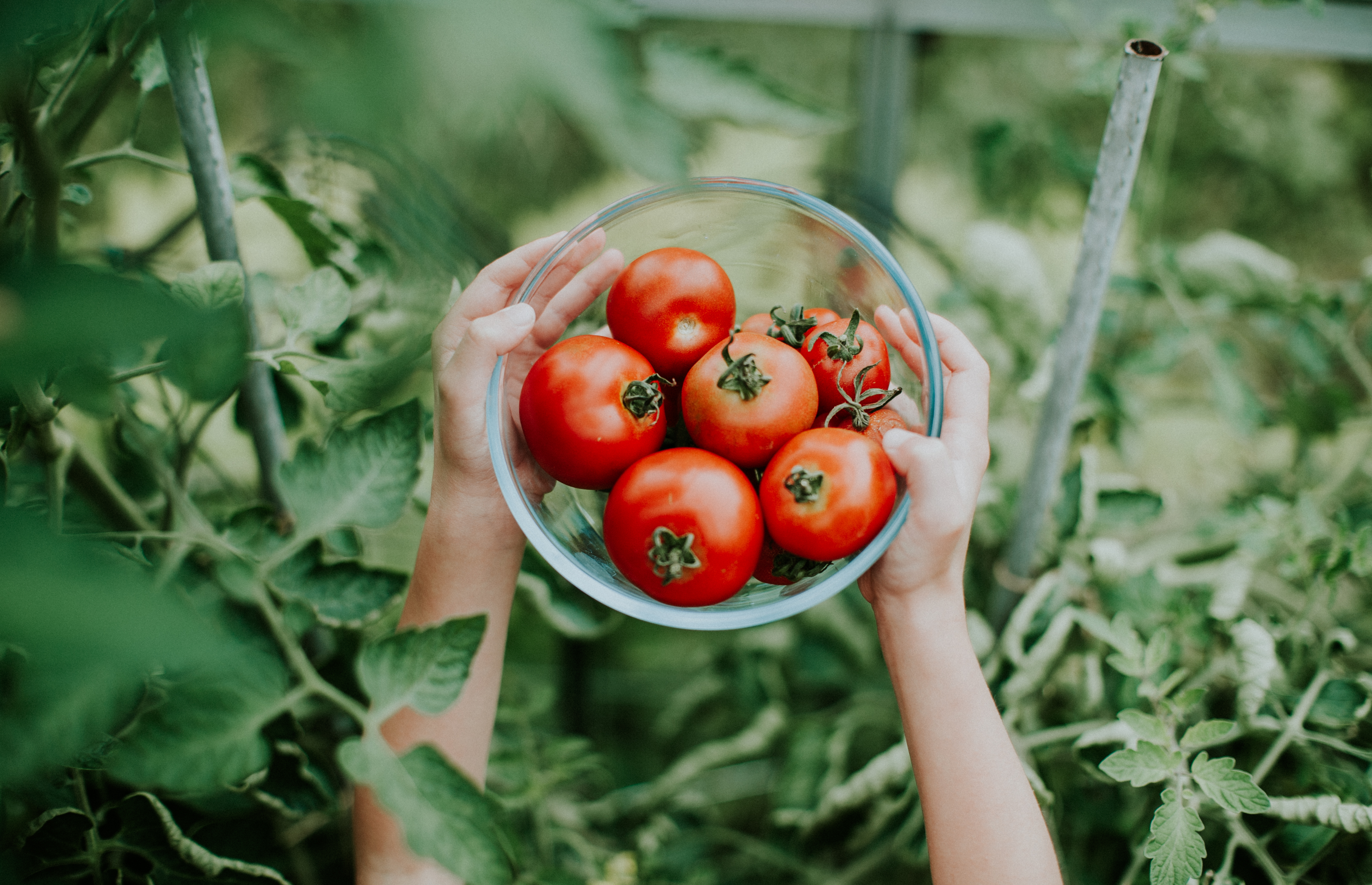 It's Tomato Time: 6 Tomato Plants for Your Garden | Garden Guides