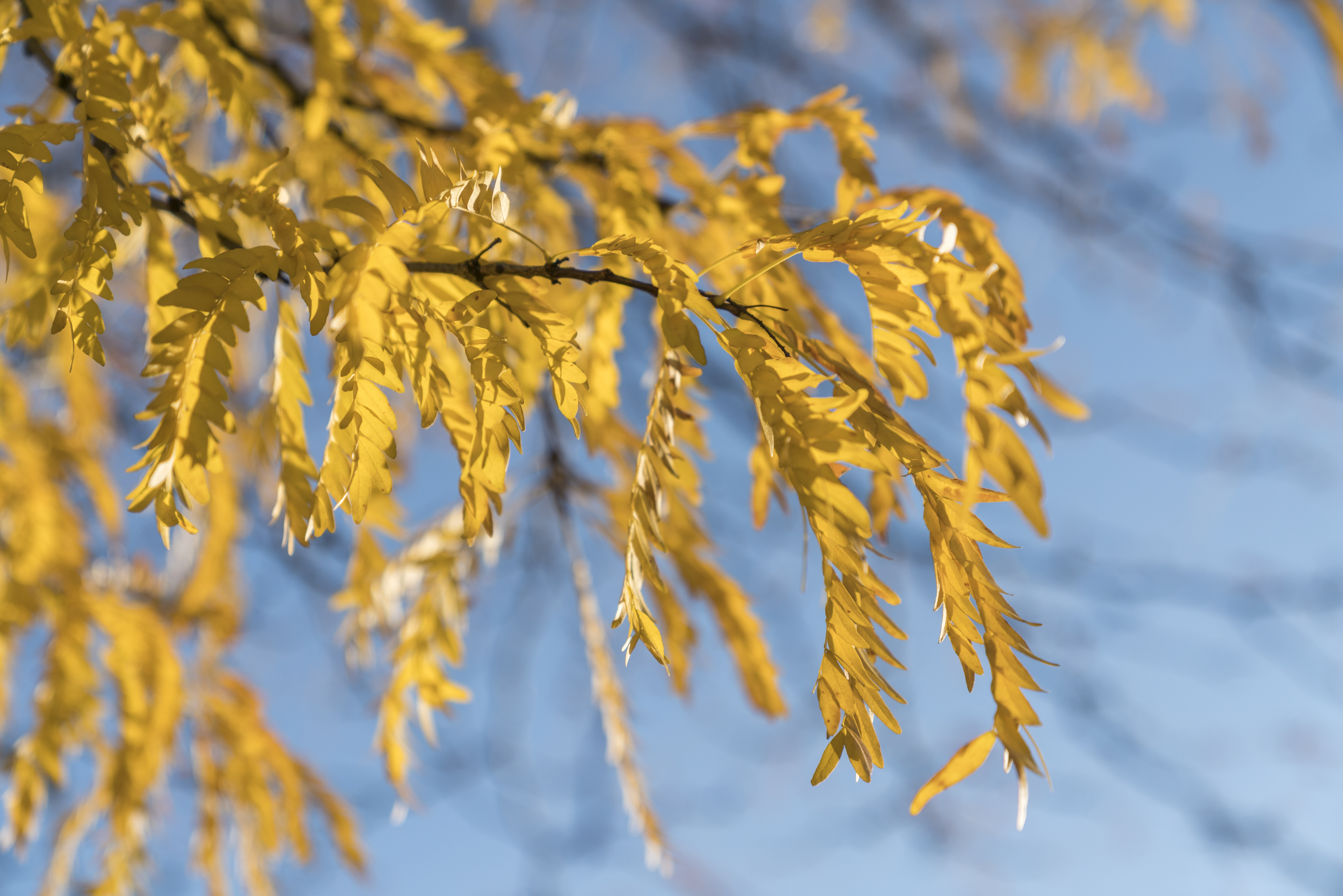 Watering and Drooping Leaves | Home Guides | SF Gate on