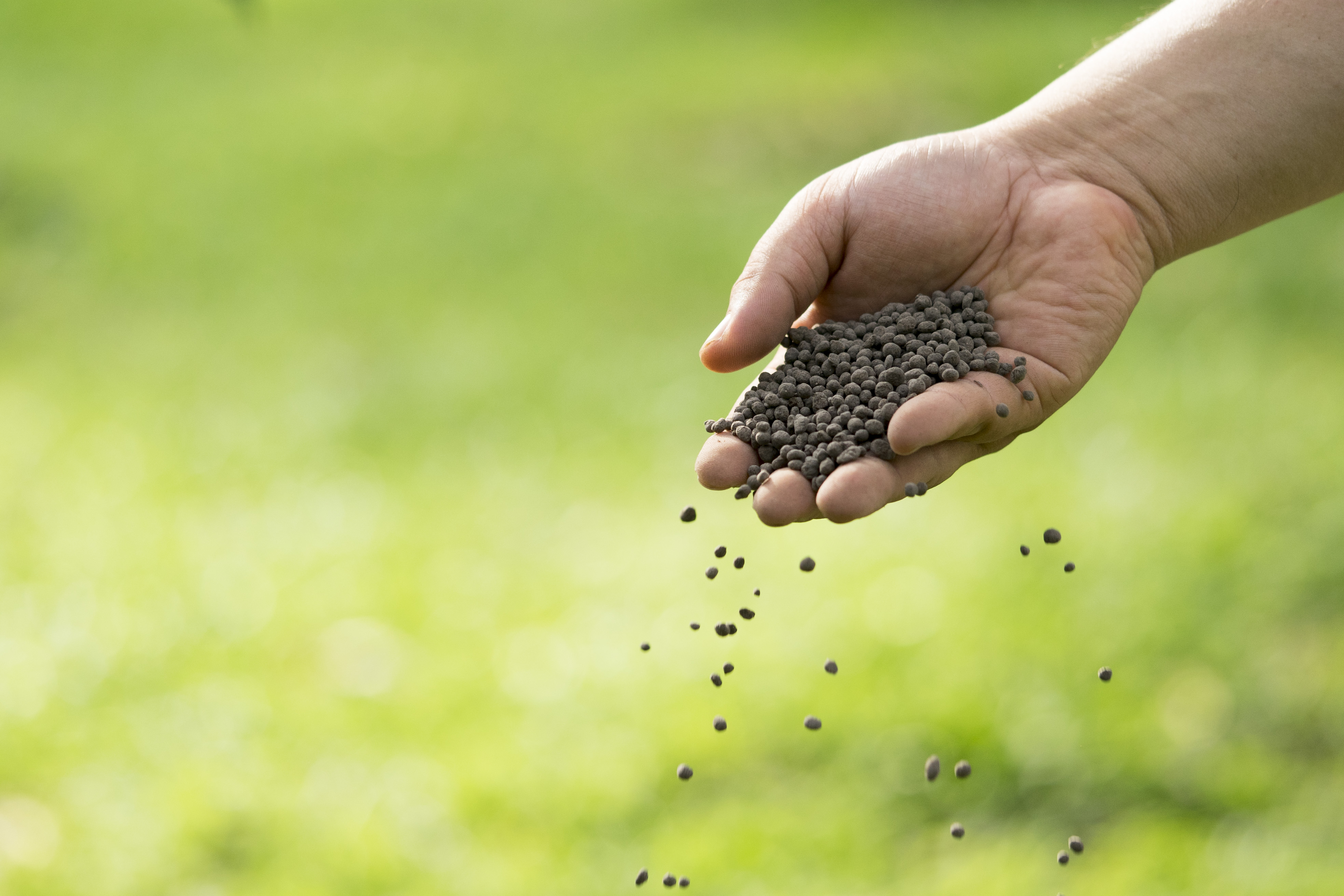 Homemade Nitrogen Fertilizer