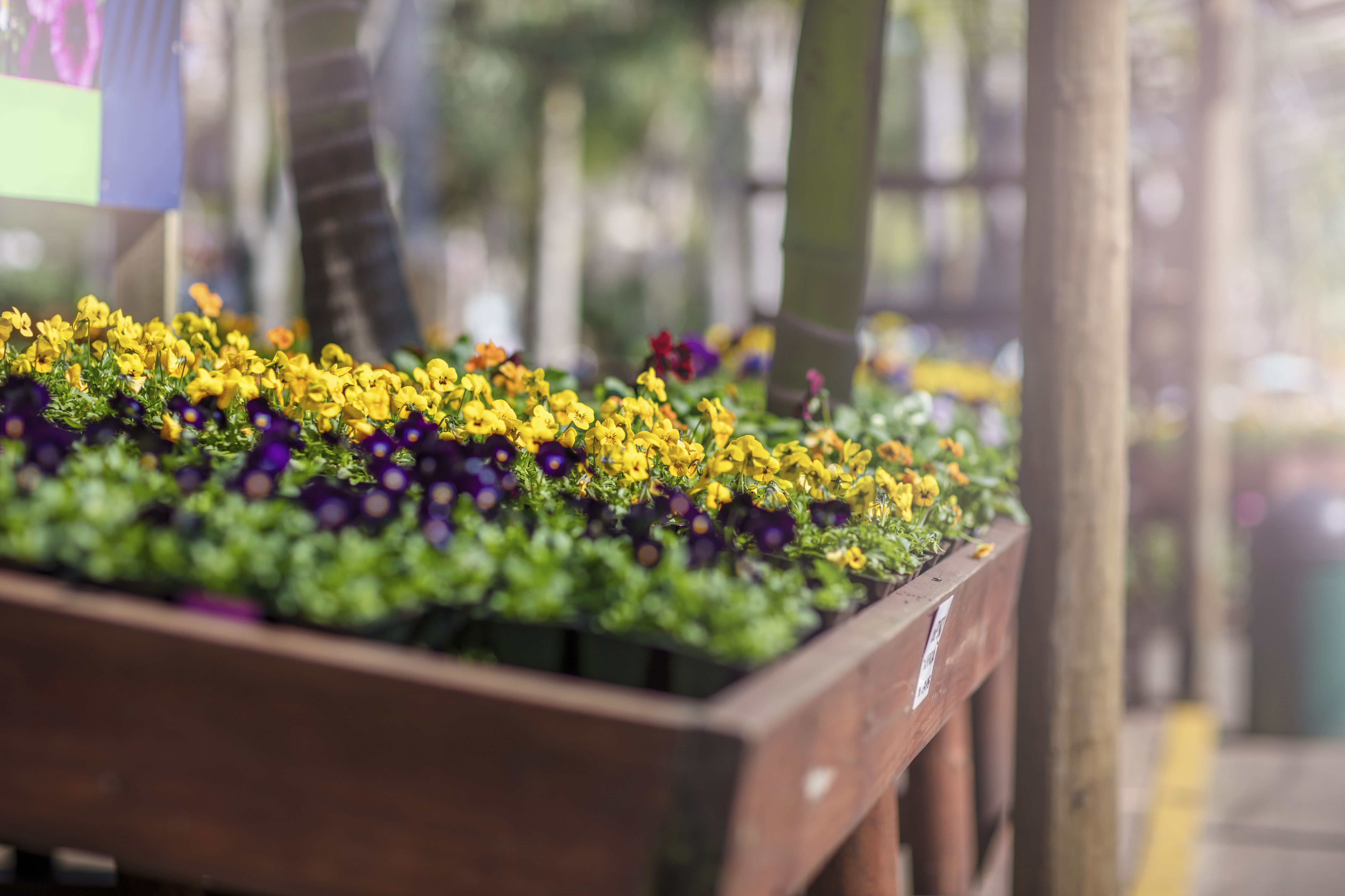 What Type Of Wood Is Needed To Build A Planter Box Home Guides