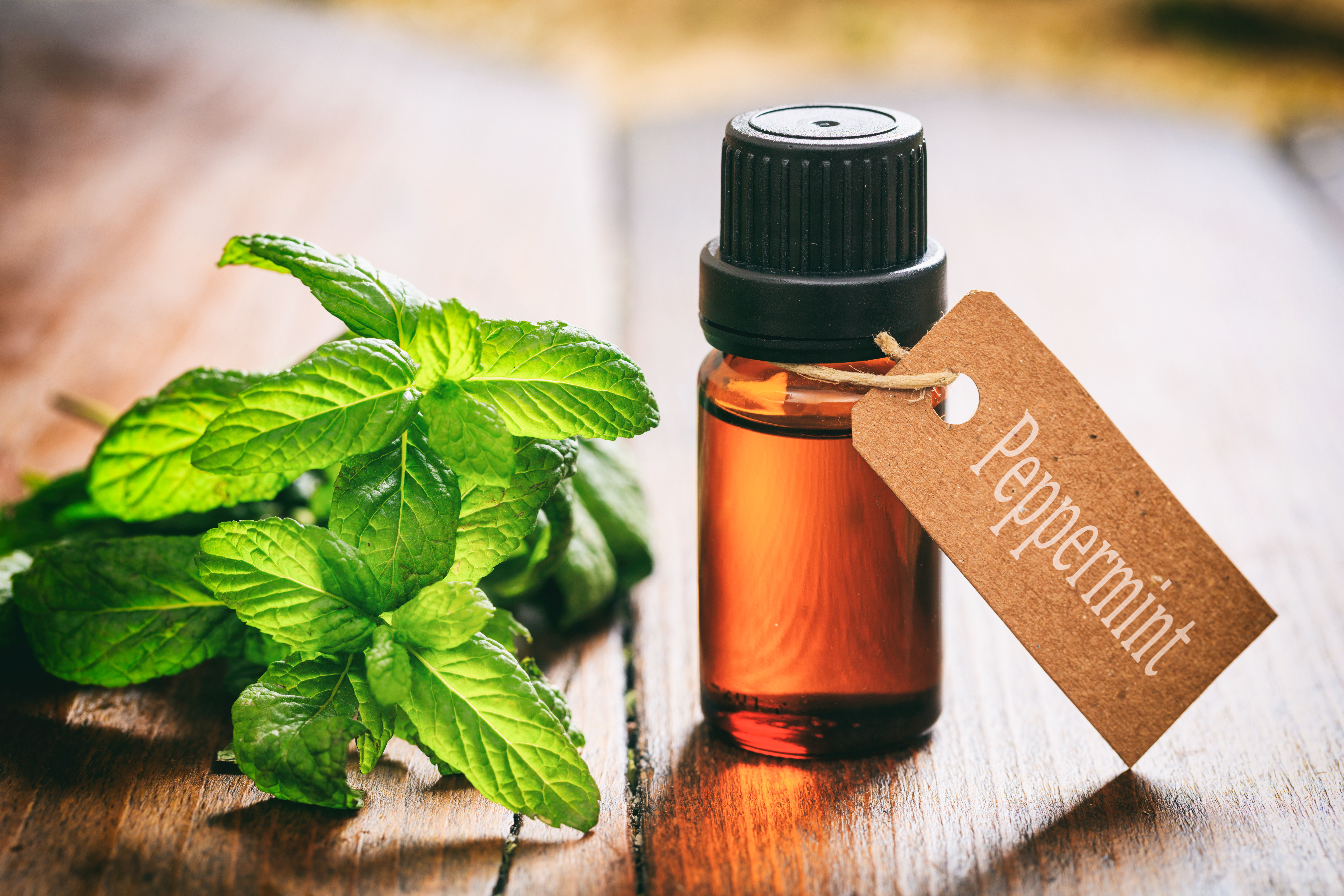 Ratio of Peppermint Oil to Water for Repelling Mice | Home Guides