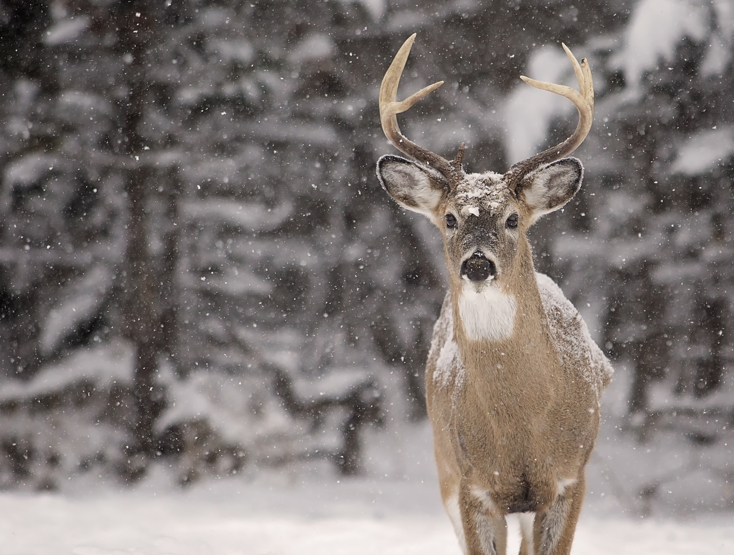 What Can I Feed Deer In My Backyard what to feed wild deer | sciencing
