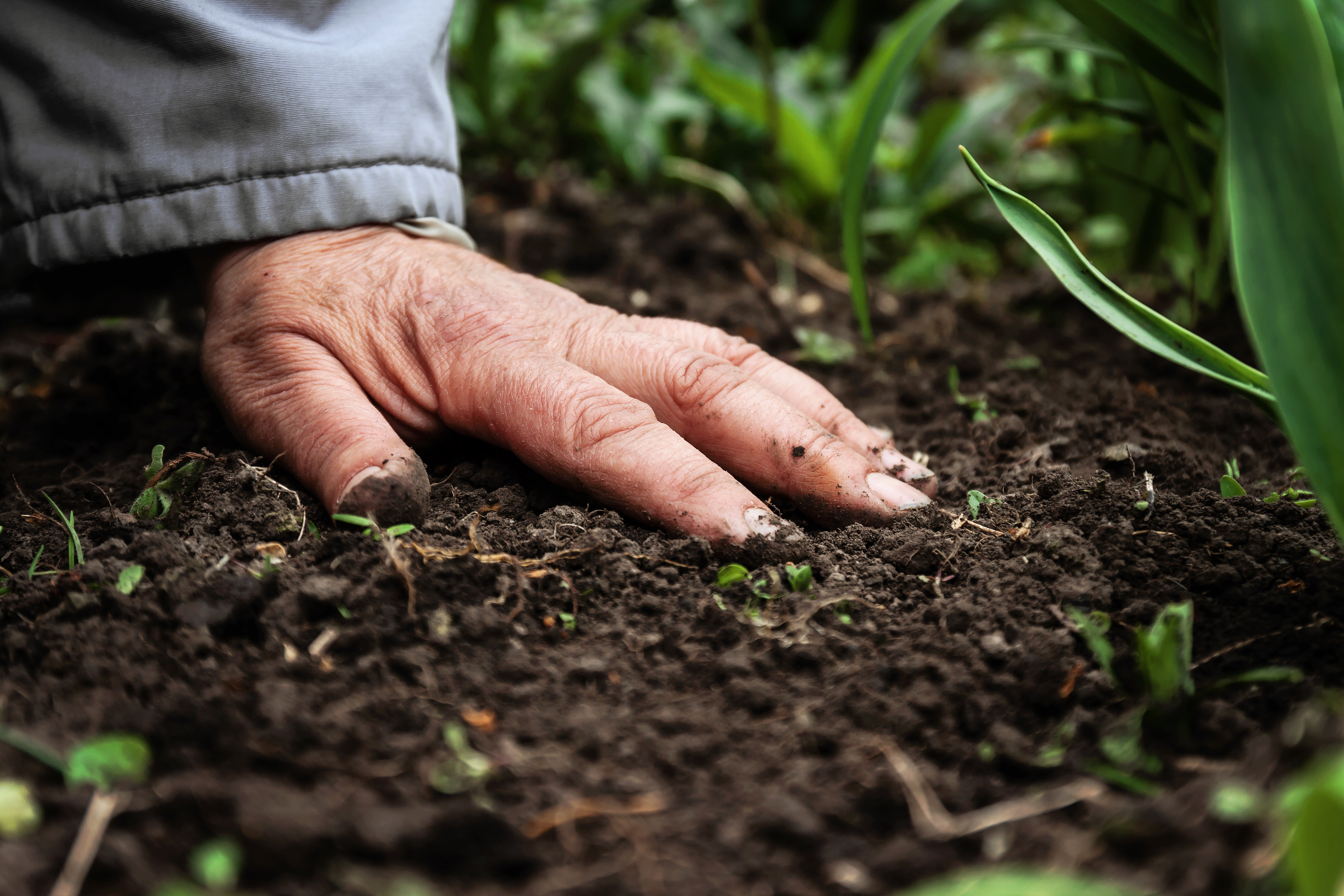 Natural Ways to Lower Soil pH | Home Guides | SF Gate