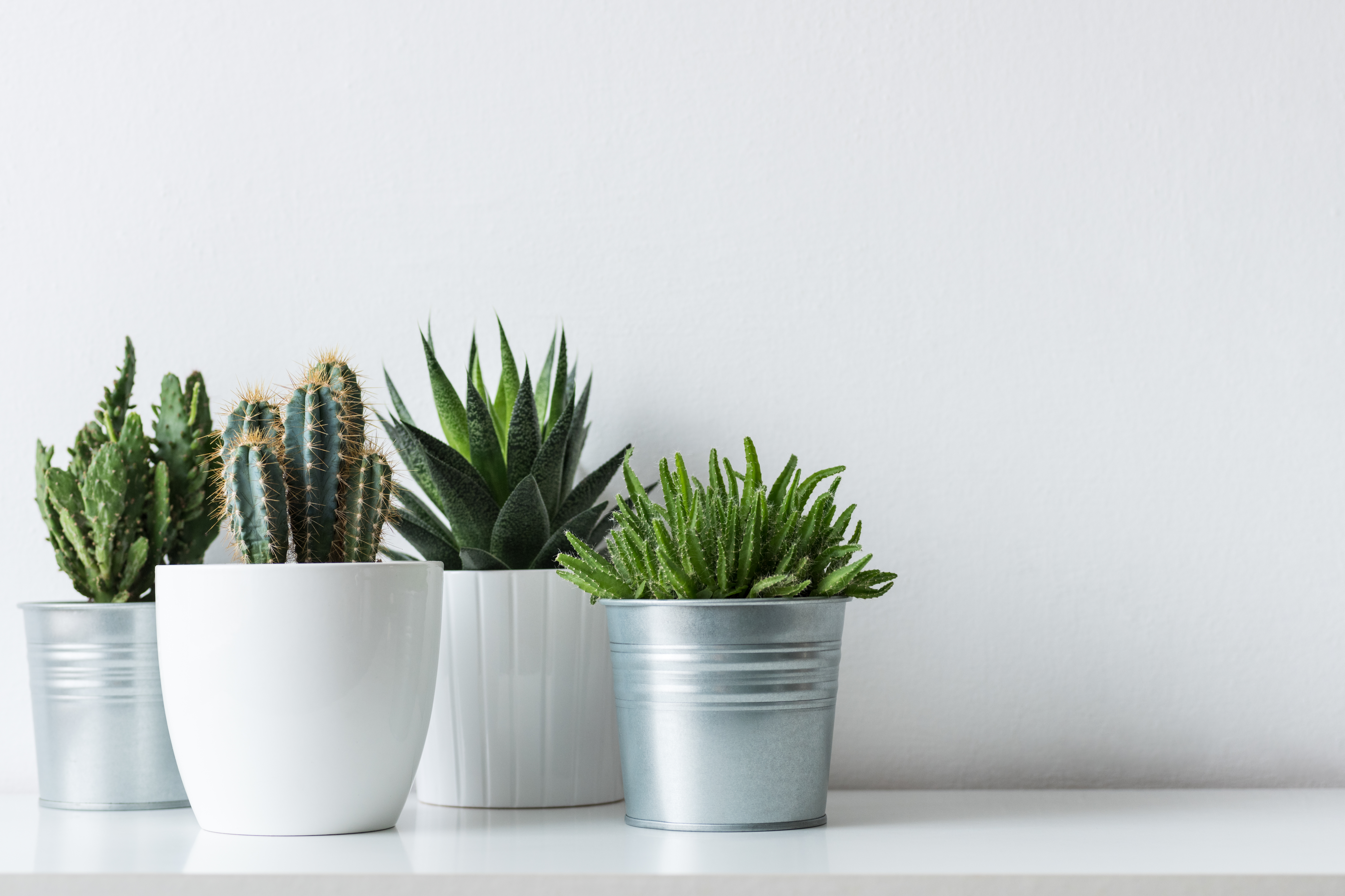 How To Replant A Succulent