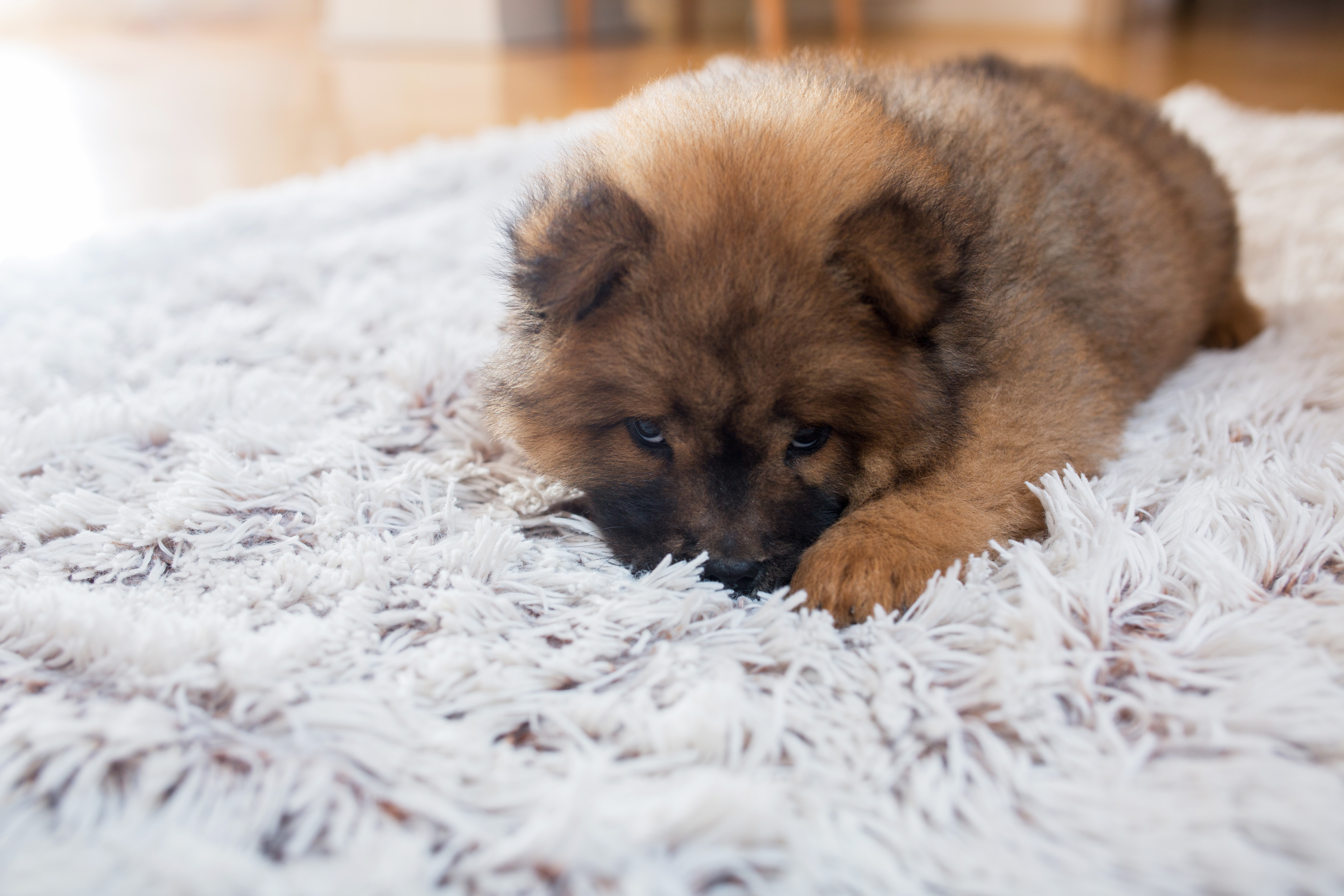 How to Deodorize Dog Urine on Outdoor Carpeting | Home Guides | SF Gate