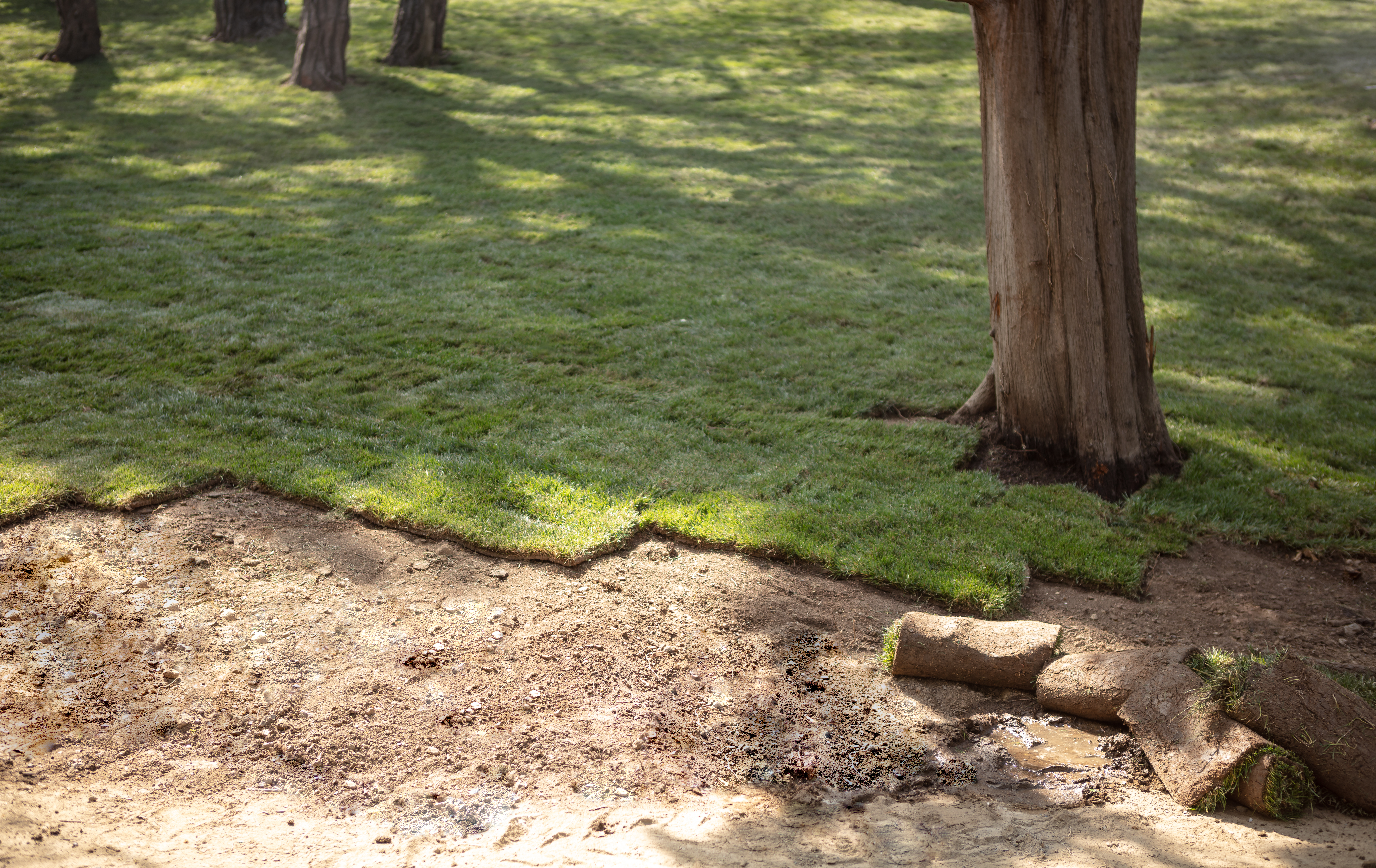 Do You Have to Roll Over New Sod? | Home Guides | SF Gate
