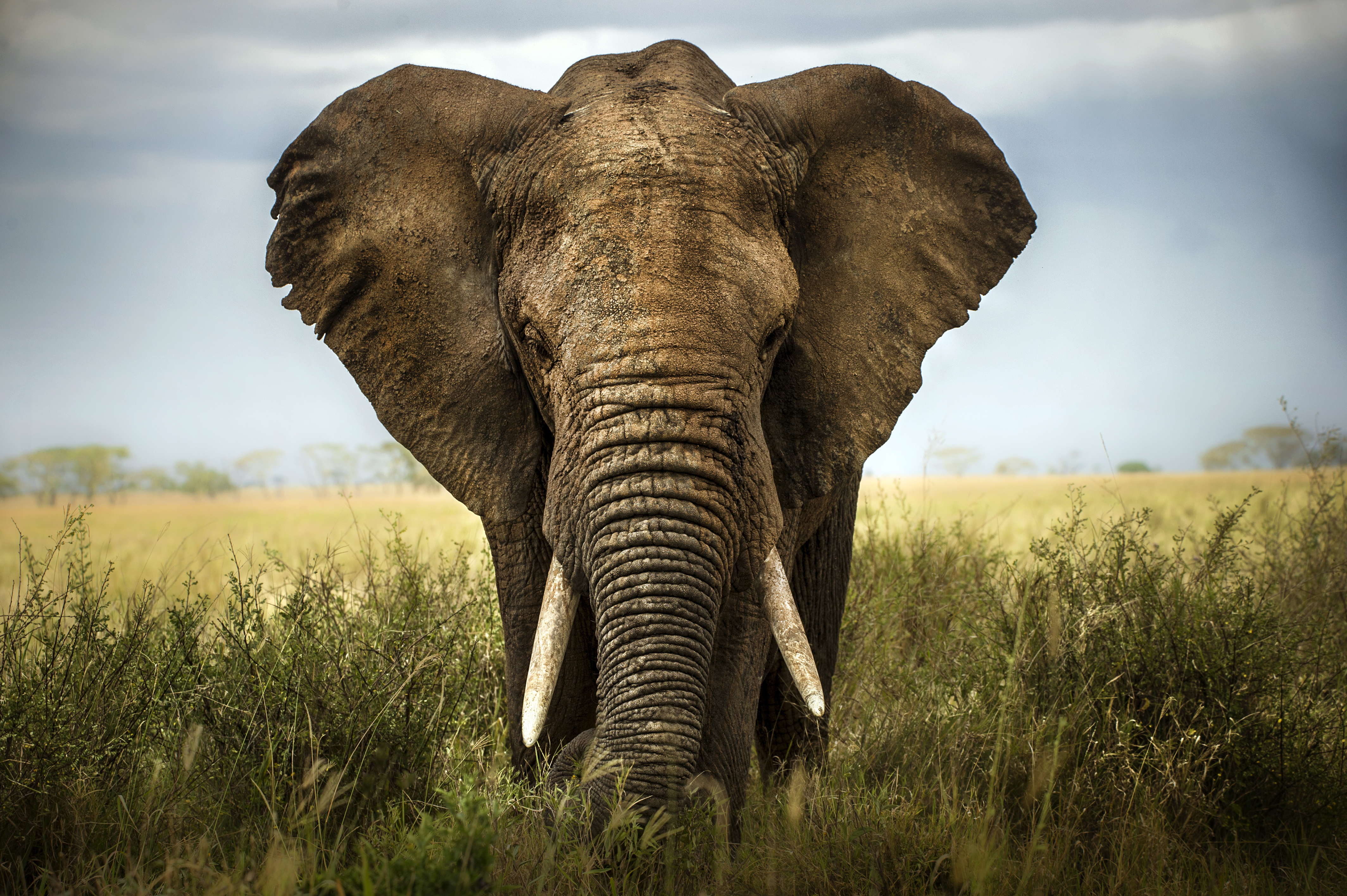 The Differences Between Mammoths & Elephants | Sciencing