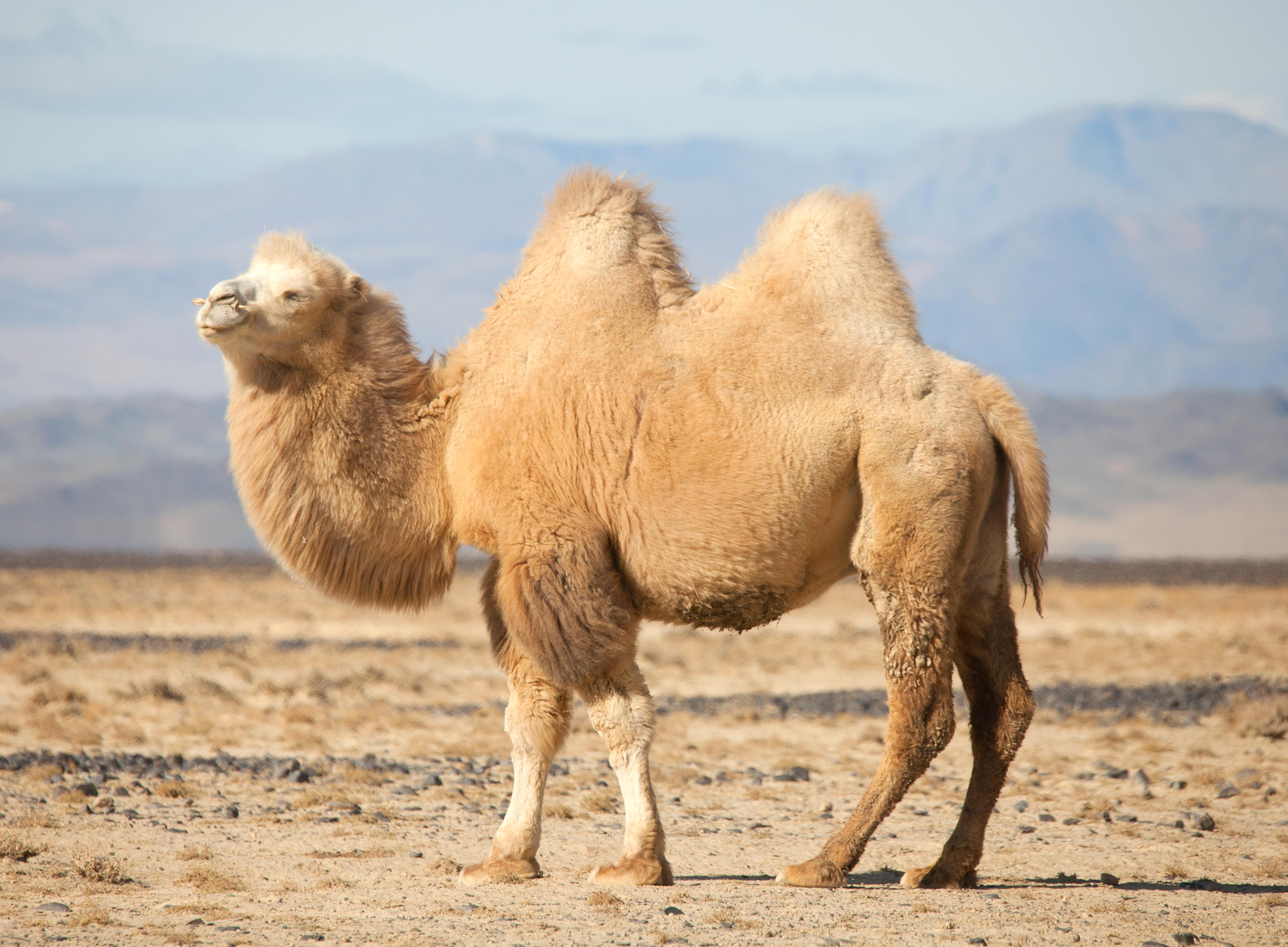 what desert animals live underground