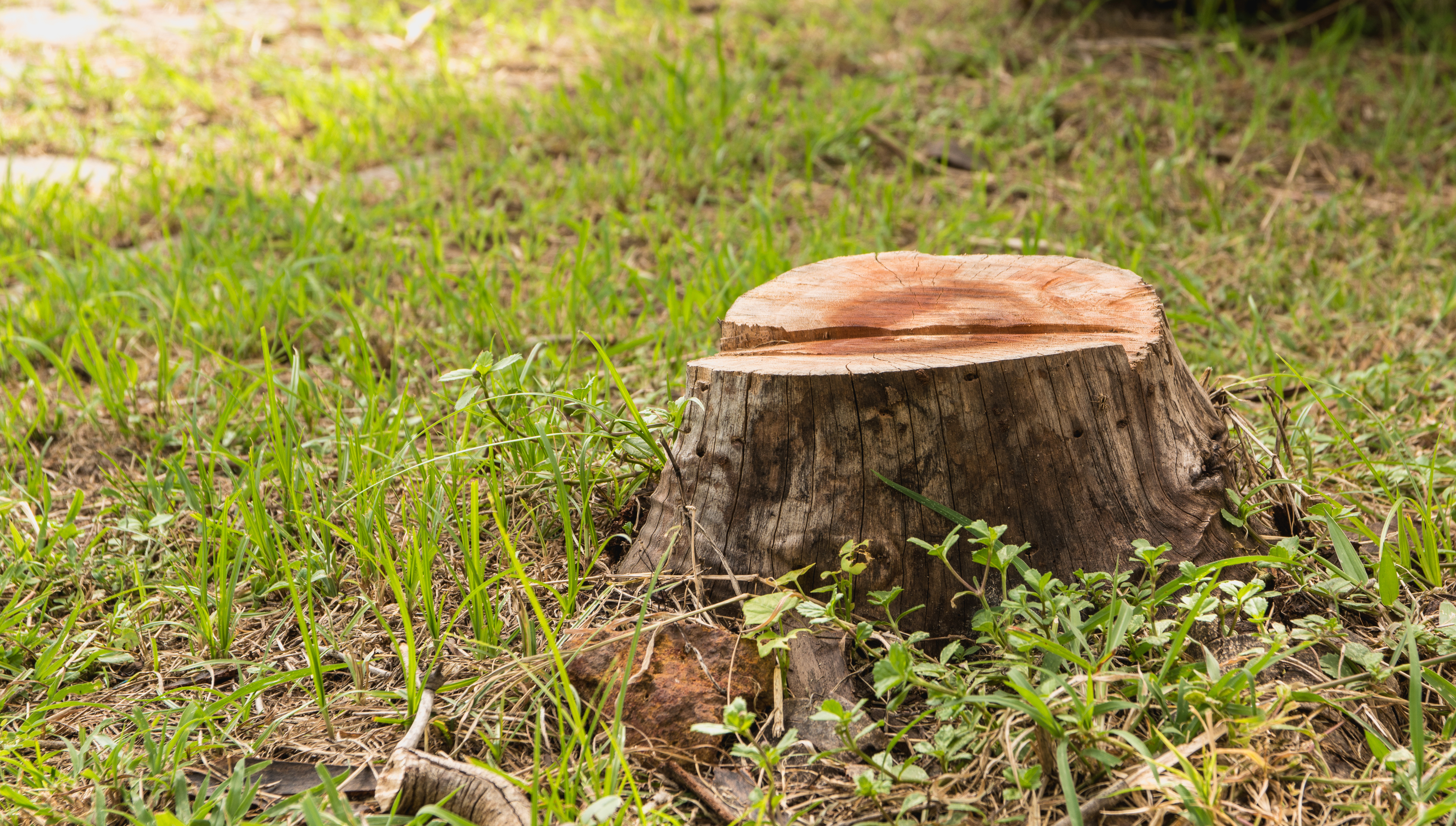How to Fix the Soil That Had a Tree Stump in the Ground