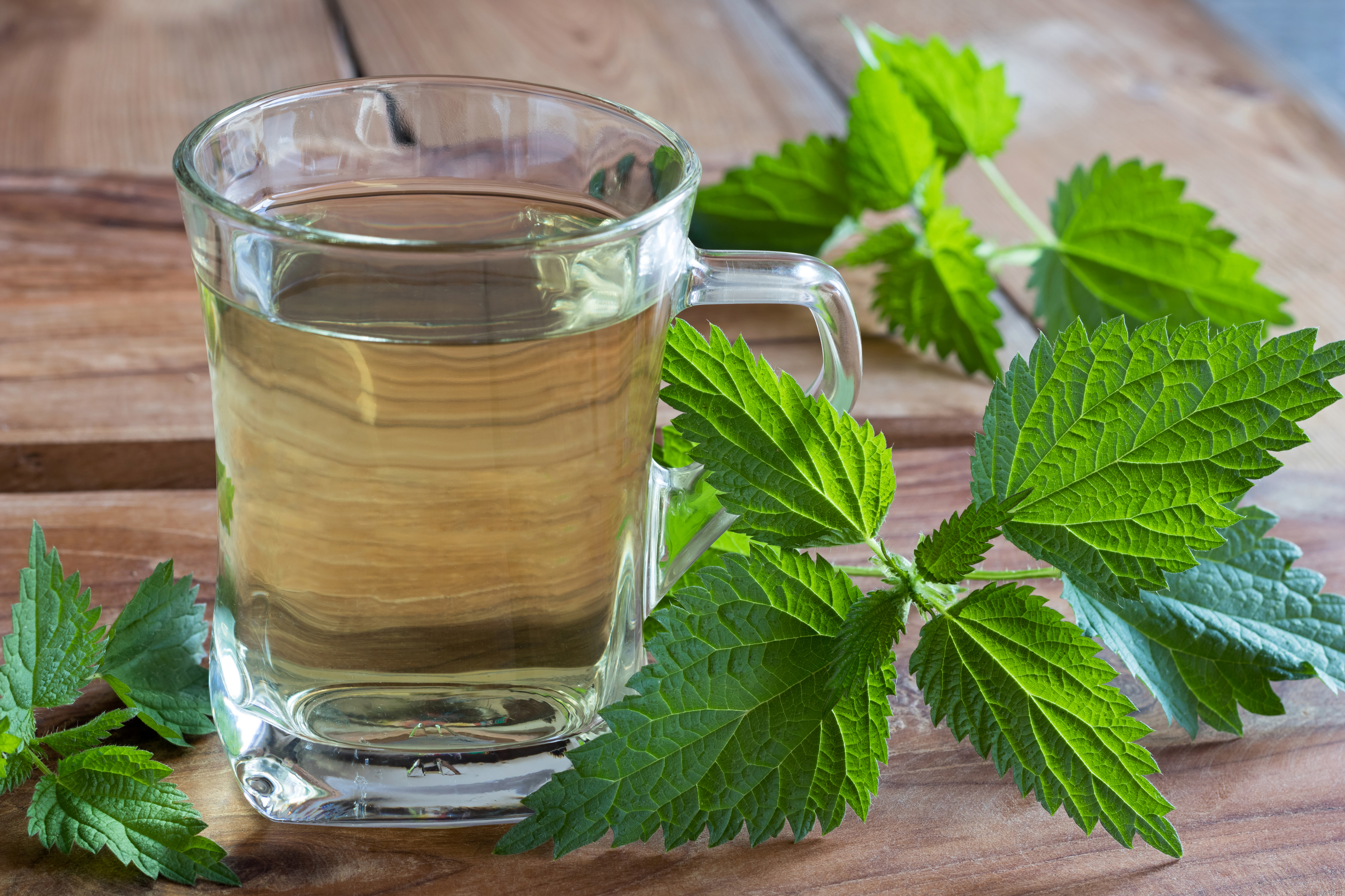 The Benefits & Side Effects of Nettle Leaf Tea | Healthy