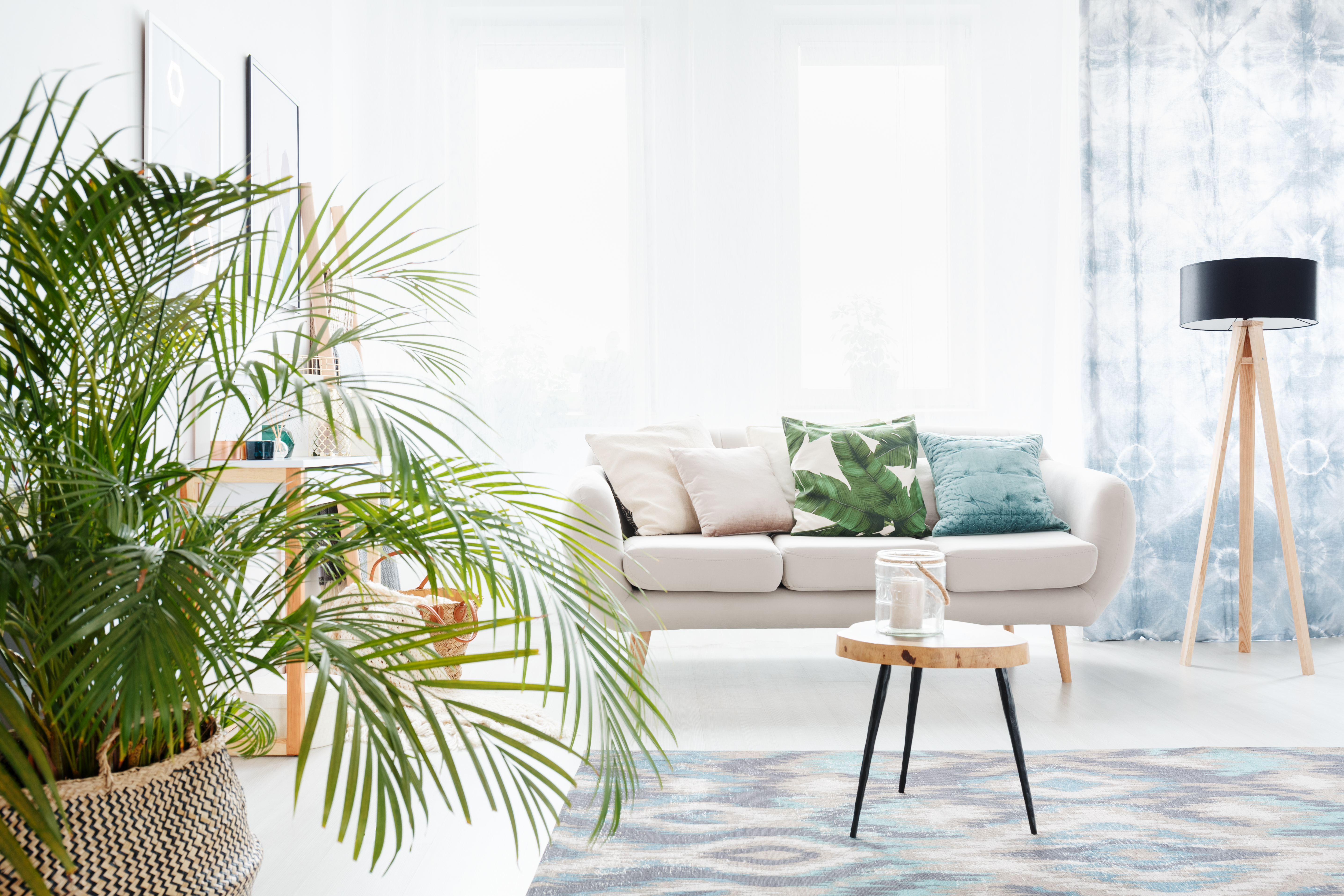Special Care for Areca Indoor Palm Trees | Home Guides | SF Gate on