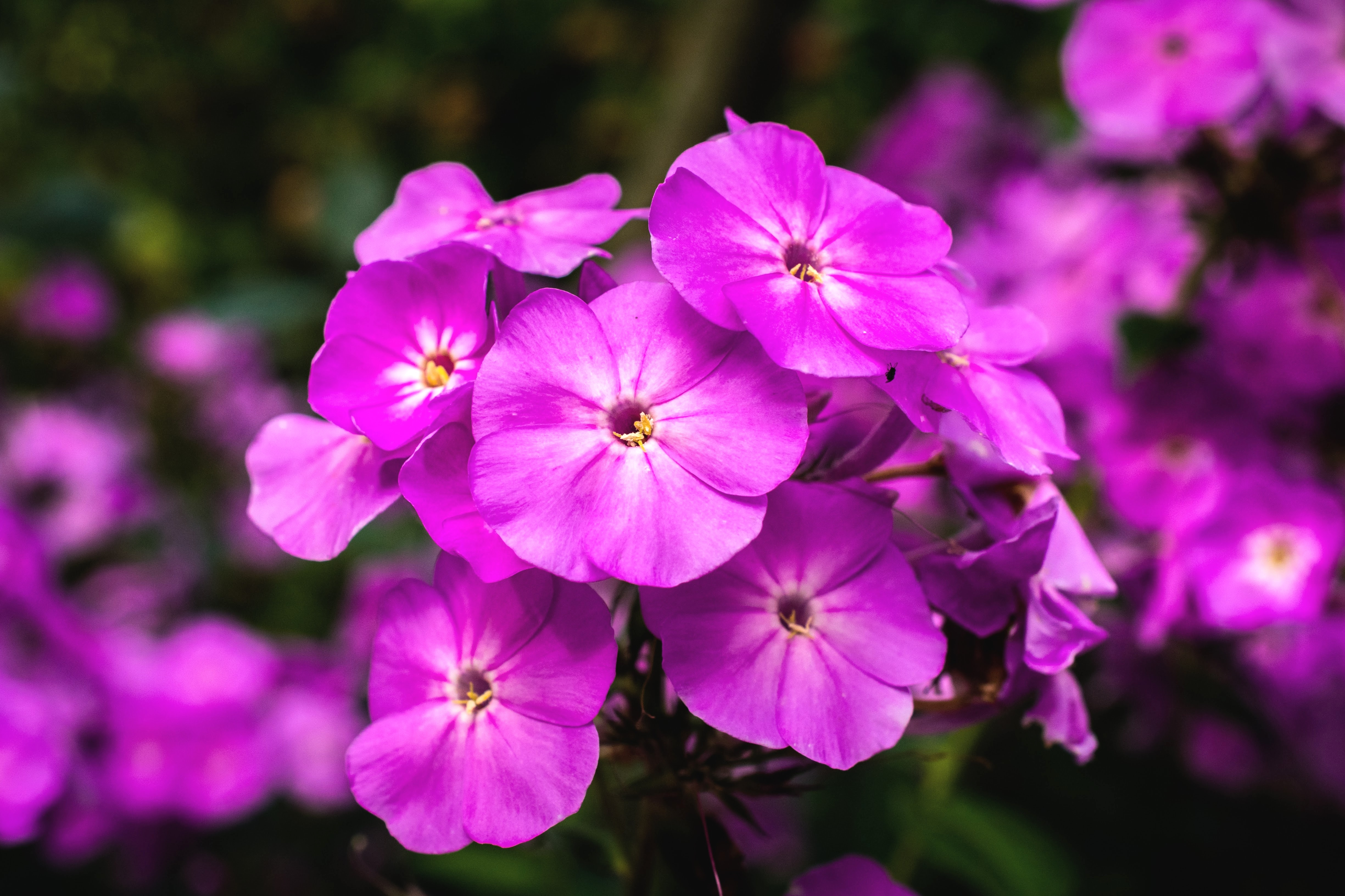 No Petunias Were Harmed In >> What Causes Petunias To Die Or Not Thrive Home Guides Sf Gate