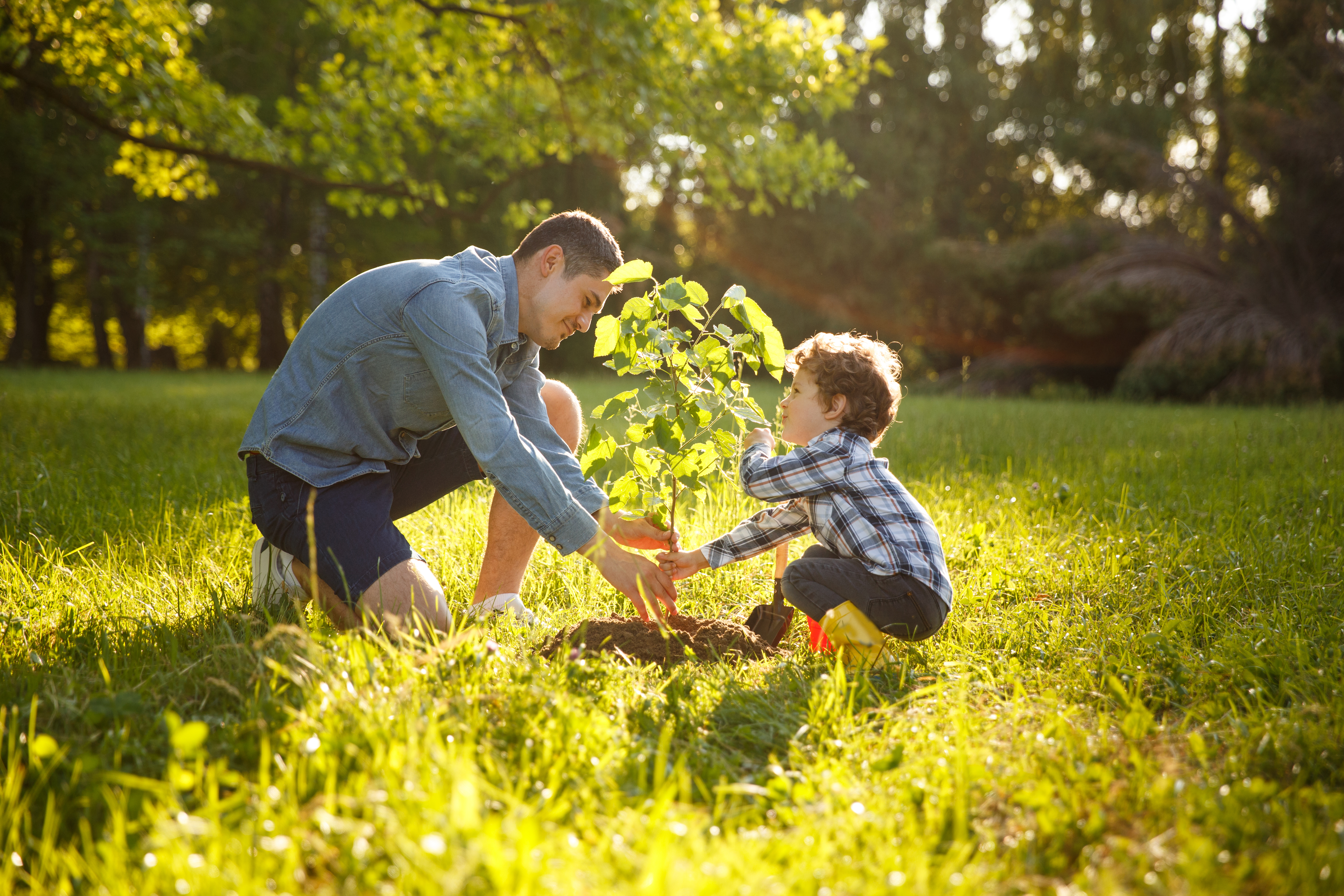 How to Get Rid of Tree Sprouts in Grass | Home Guides | SF Gate