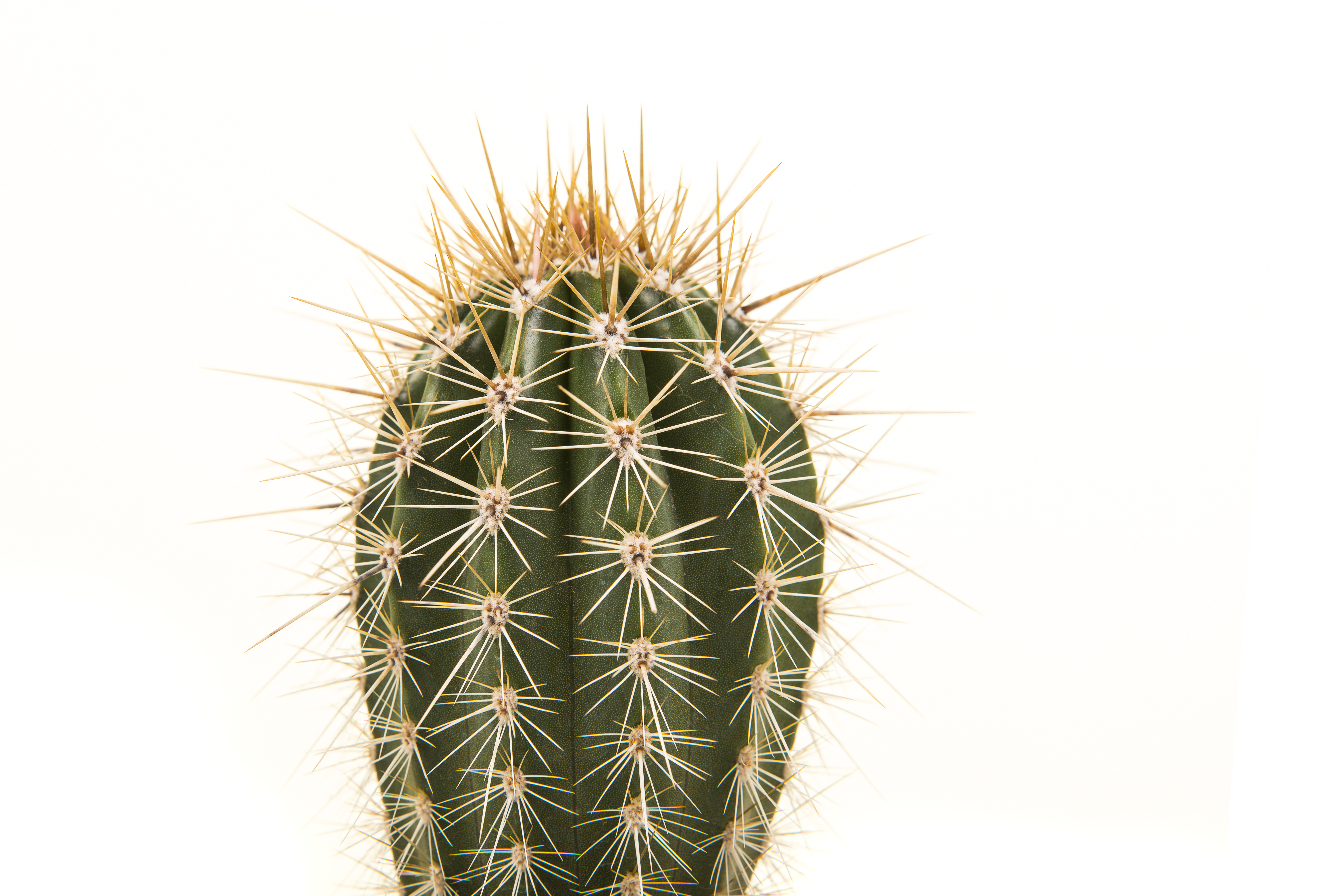 Shriveling Cactuses | Home Guides | SF Gate