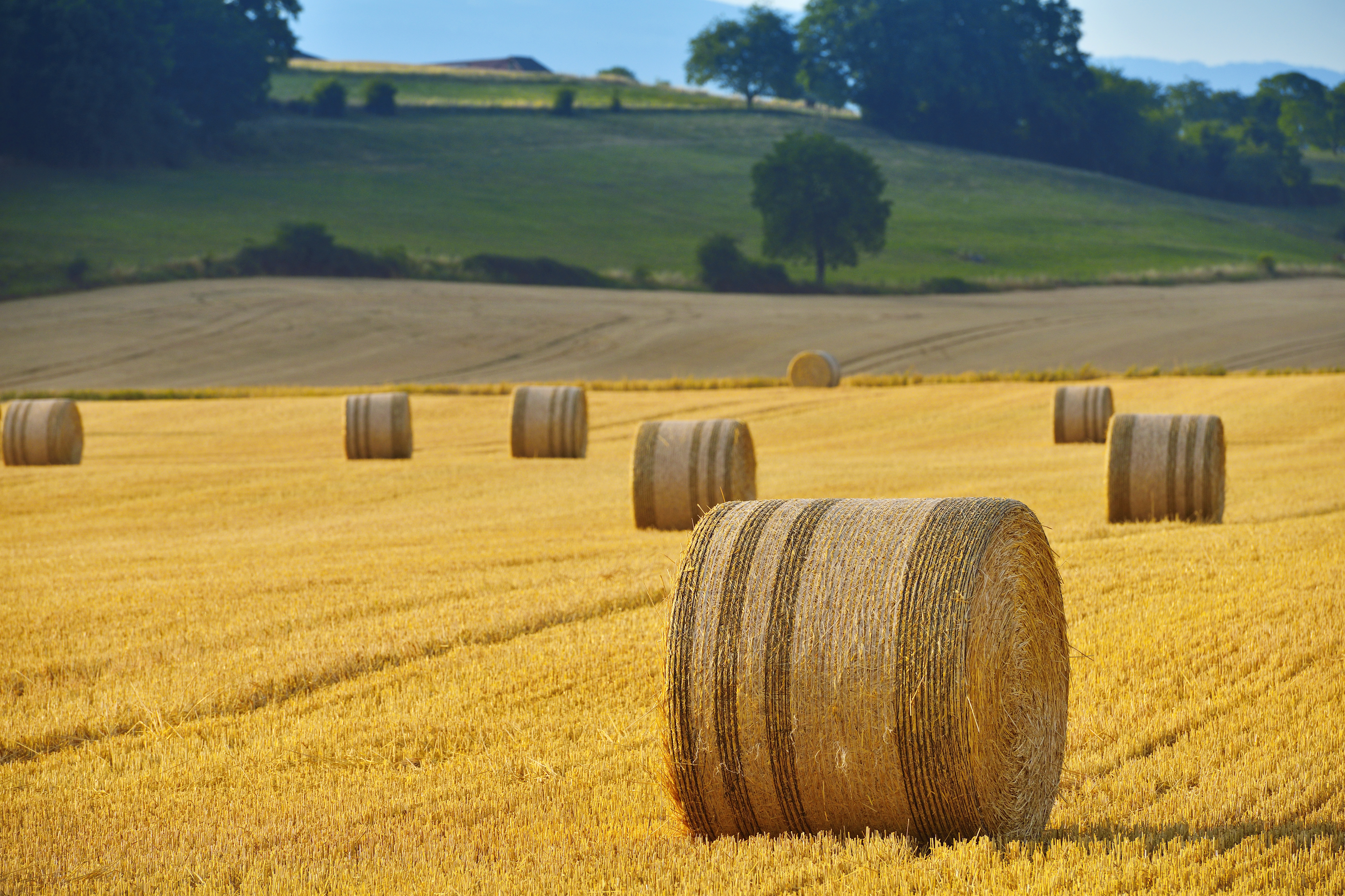 How to Start a Hay Farming Business | Career Trend