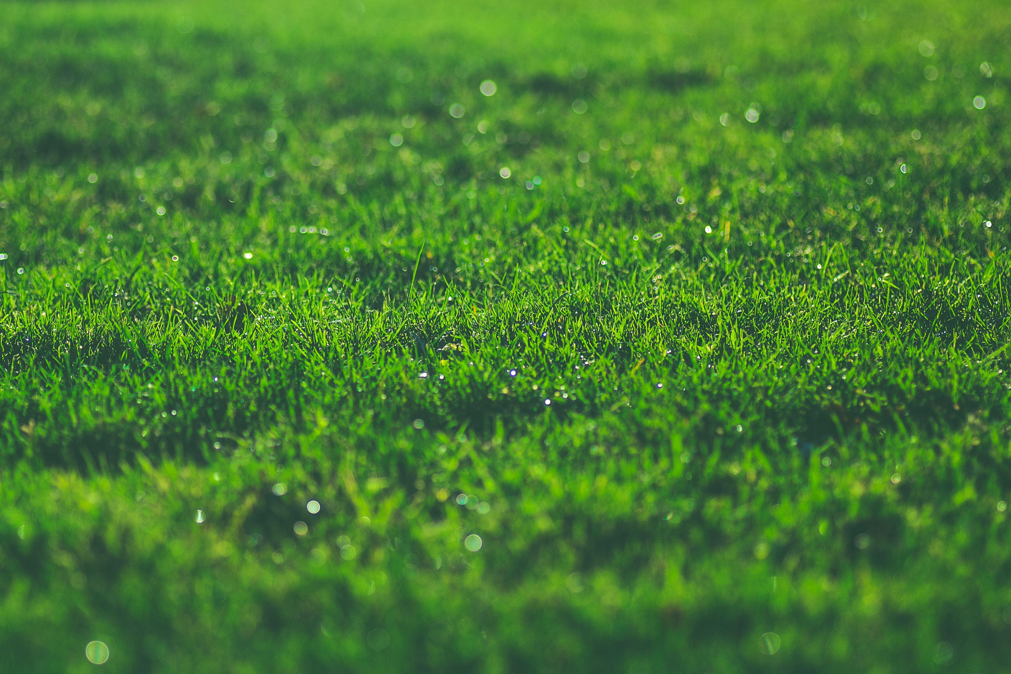 Salt and Water Mixture to Kill Weeds in Grass and Flowers