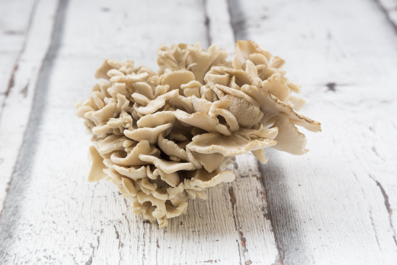 The Risks of Maitake Mushroom Supplements | Healthy Eating