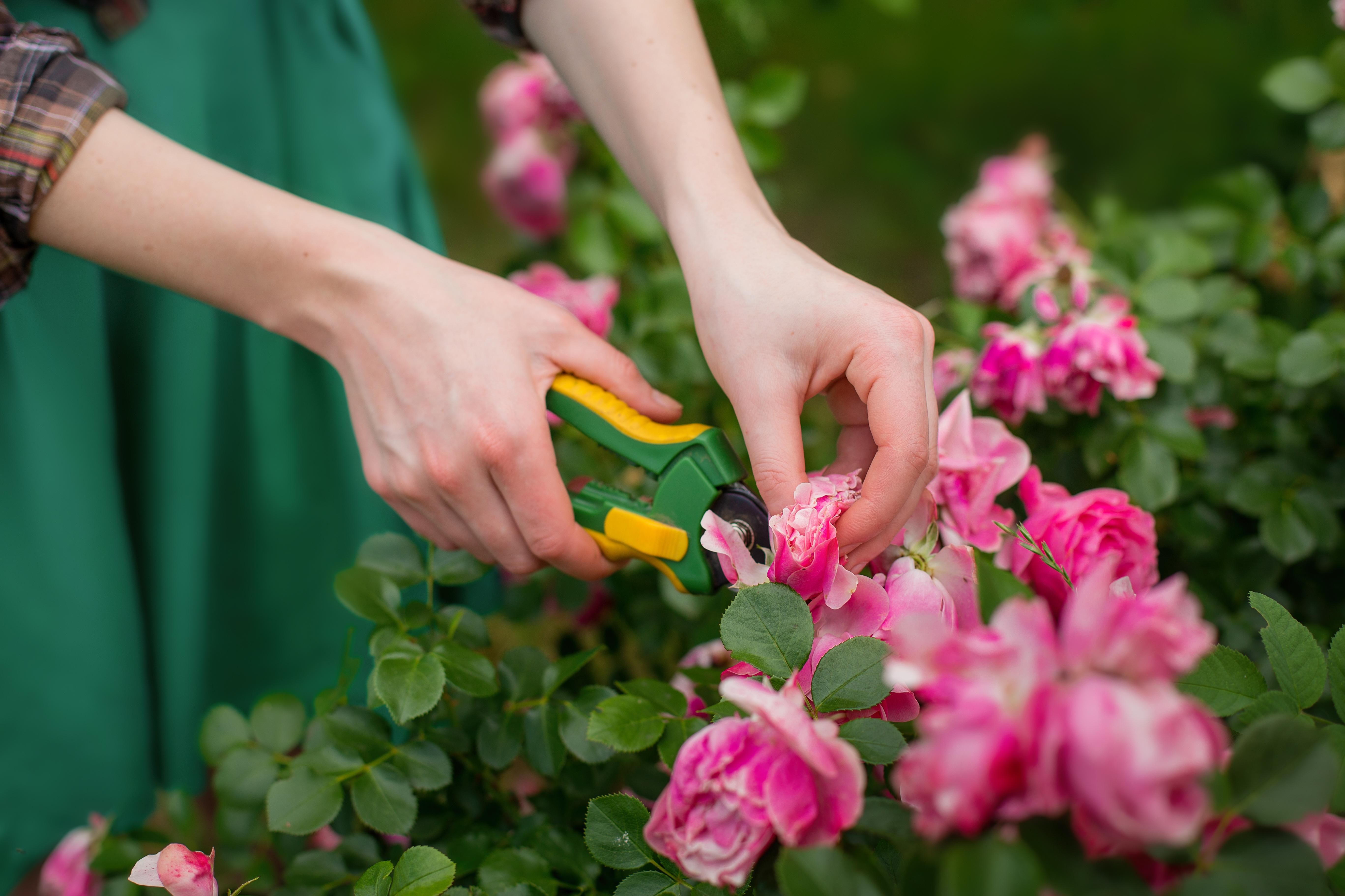 Jp Gardening Tips Rose Garden Design Flower Garden Lawn And Garden