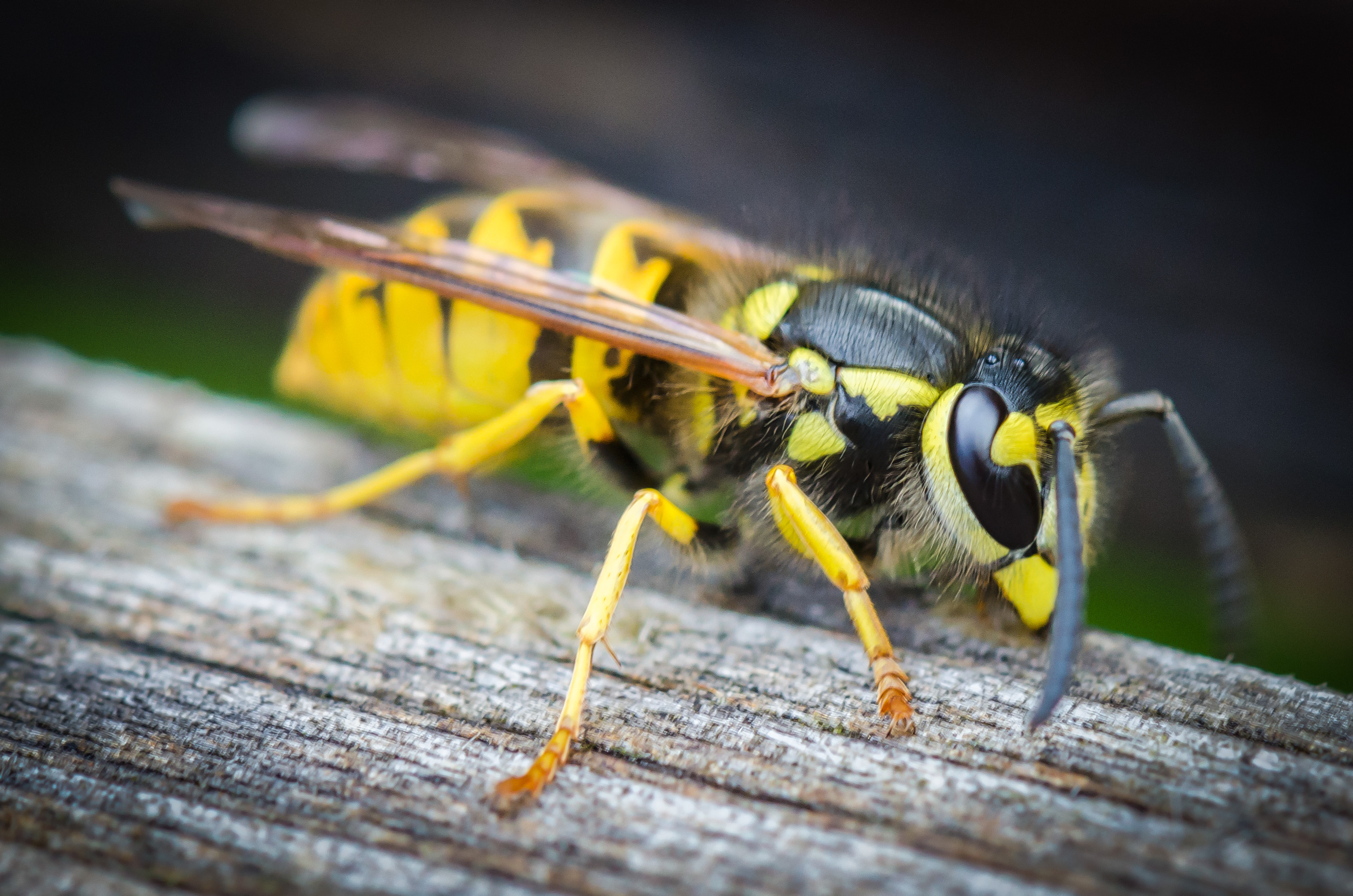 Cheap Way to Kill Wasps | Home Guides | SF Gate