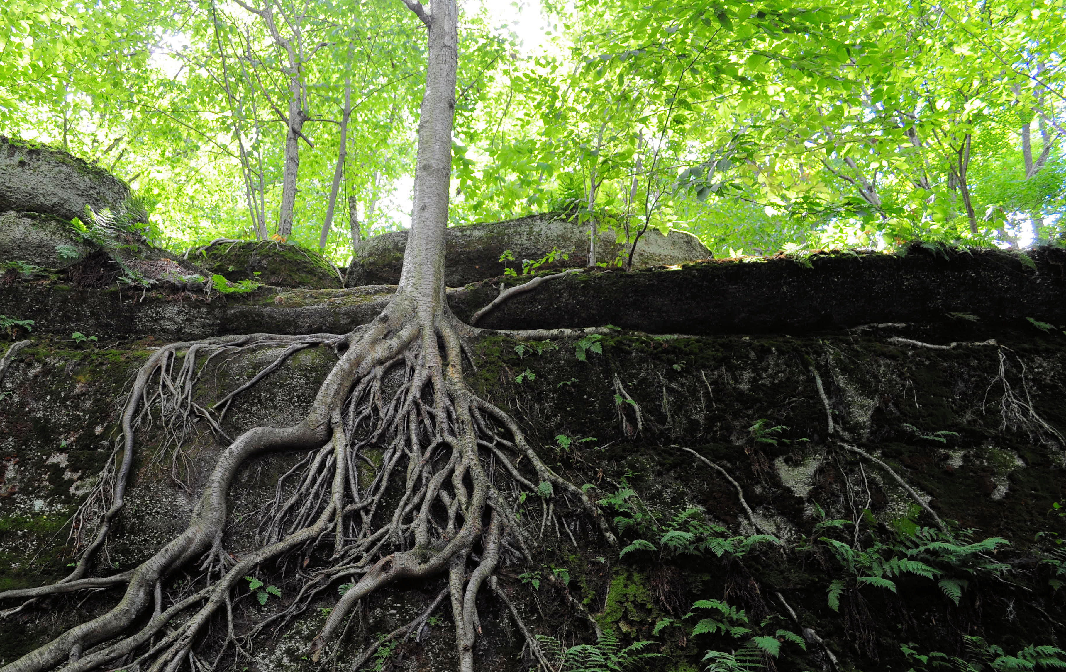How To Cover Exposed Tree Roots