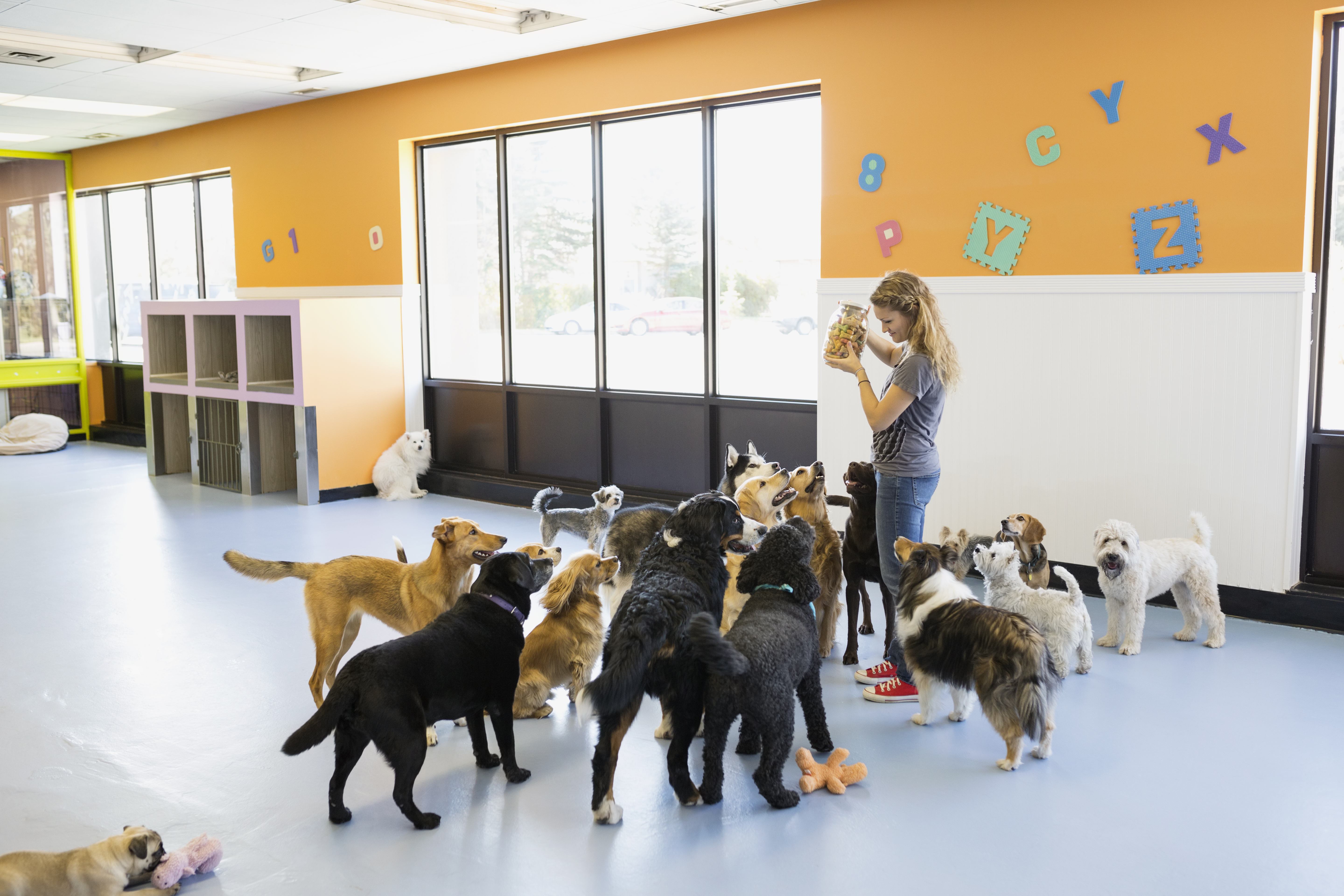 How to Apply for a Dog Kennel License in Illinois | Career Trend