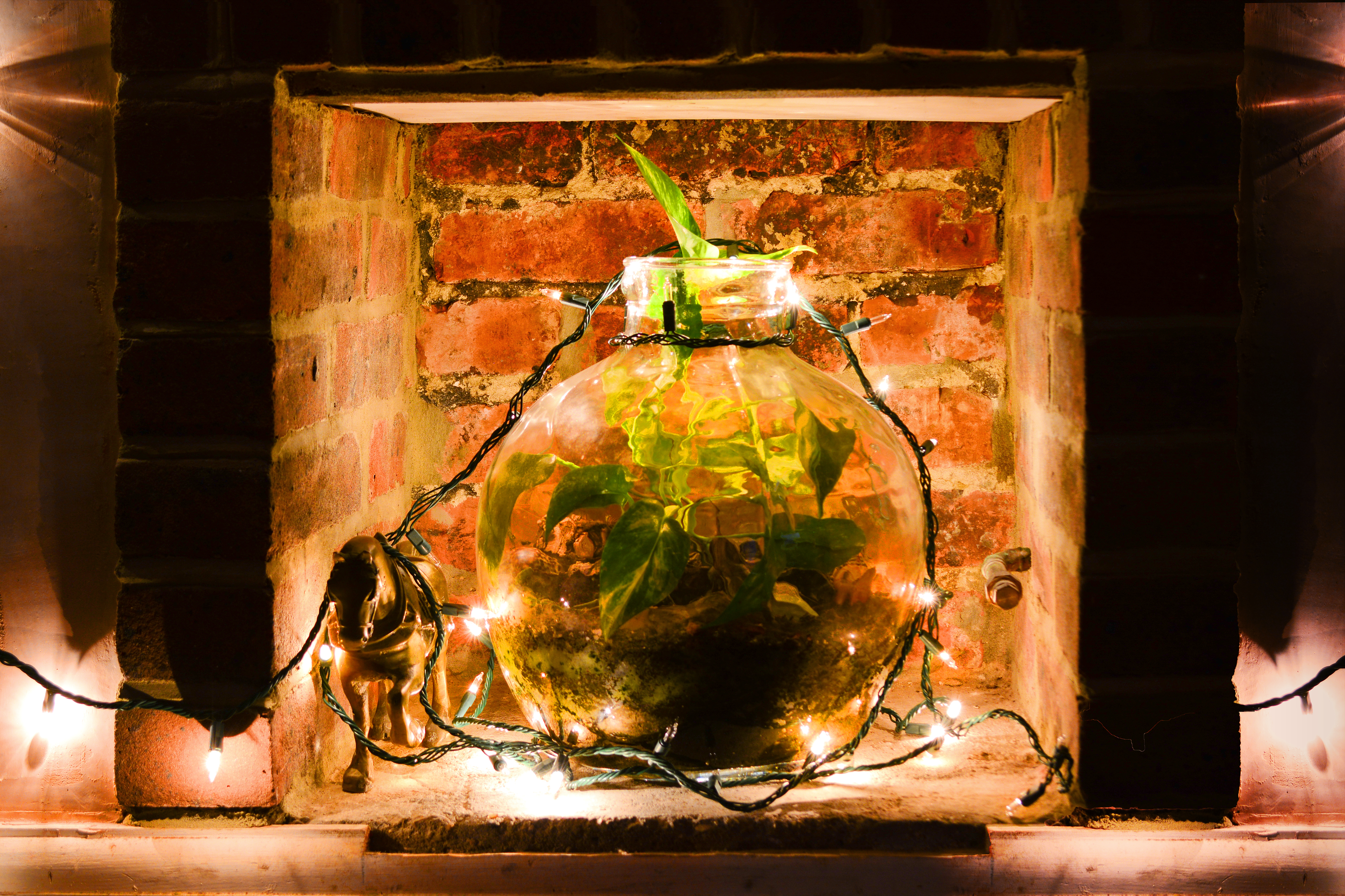 Is It Required To Have Charcoal In A Terrarium Home Guides Sf Gate