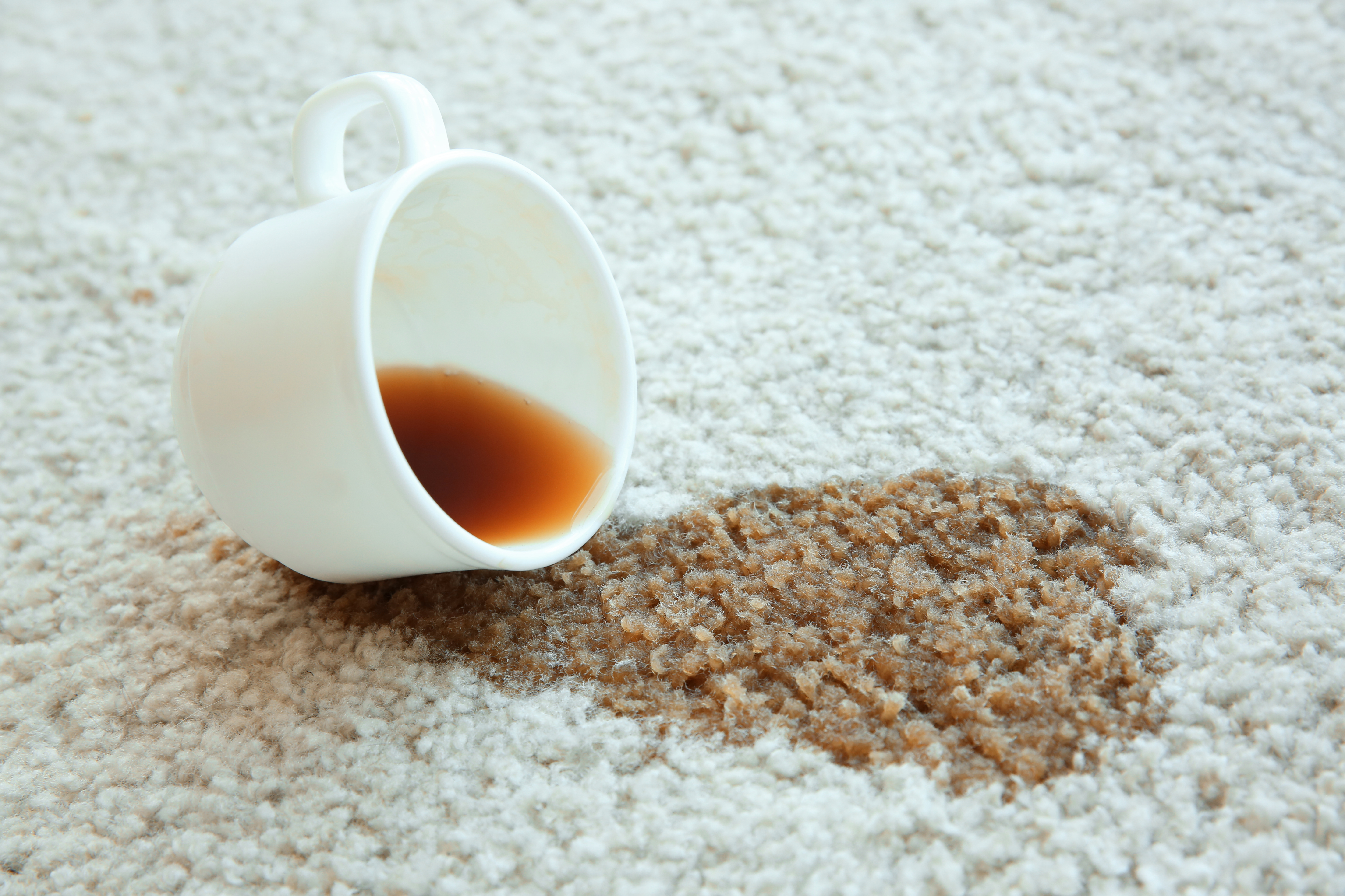 Coffee Stain On Carpet >> How To Remove Dried Coffee Stains From Carpet Hunker