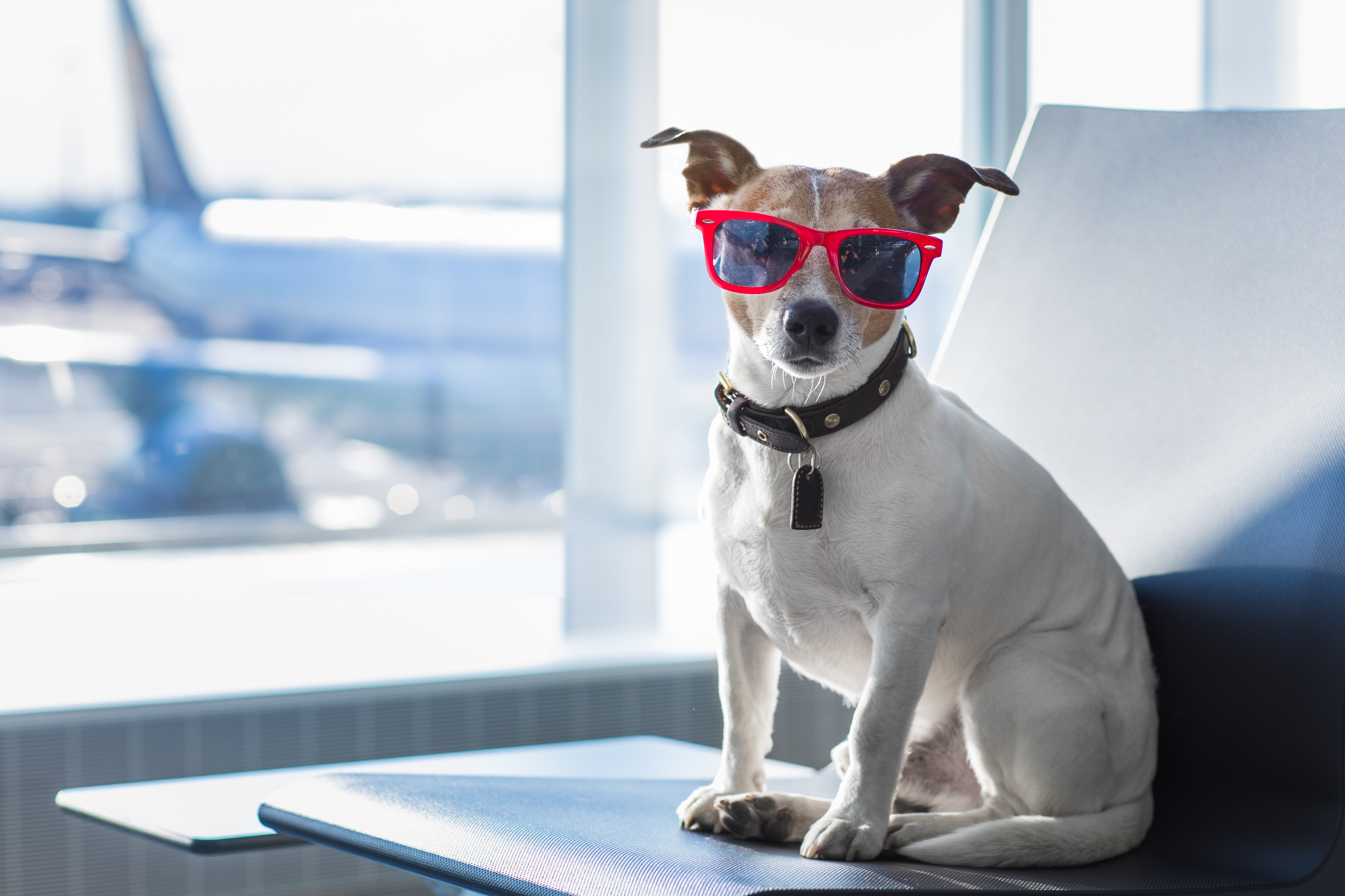 How To Take A Dog On A Plane 10best