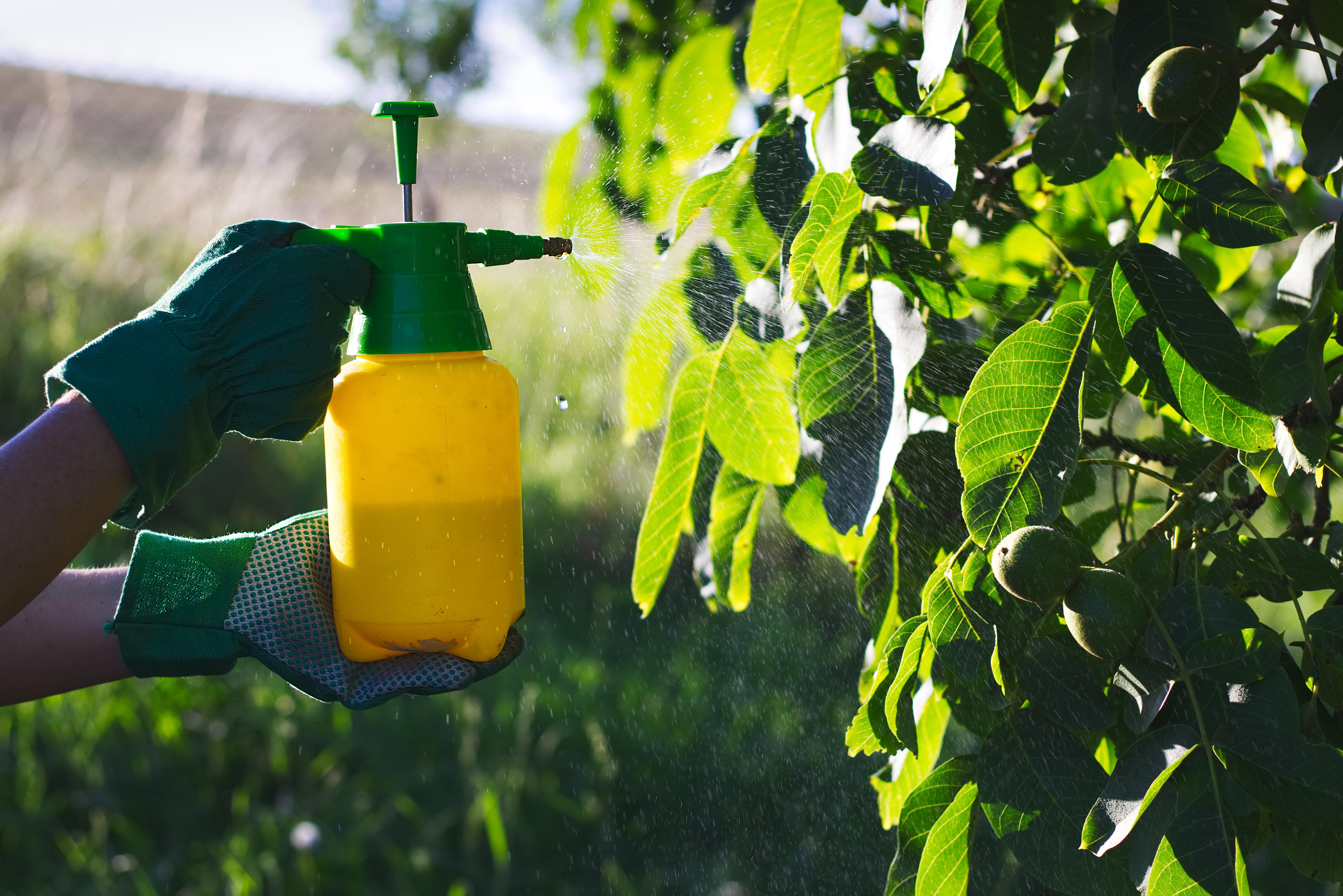 Homemade Organic Pesticide for Vegetables | Home Guides | SF Gate