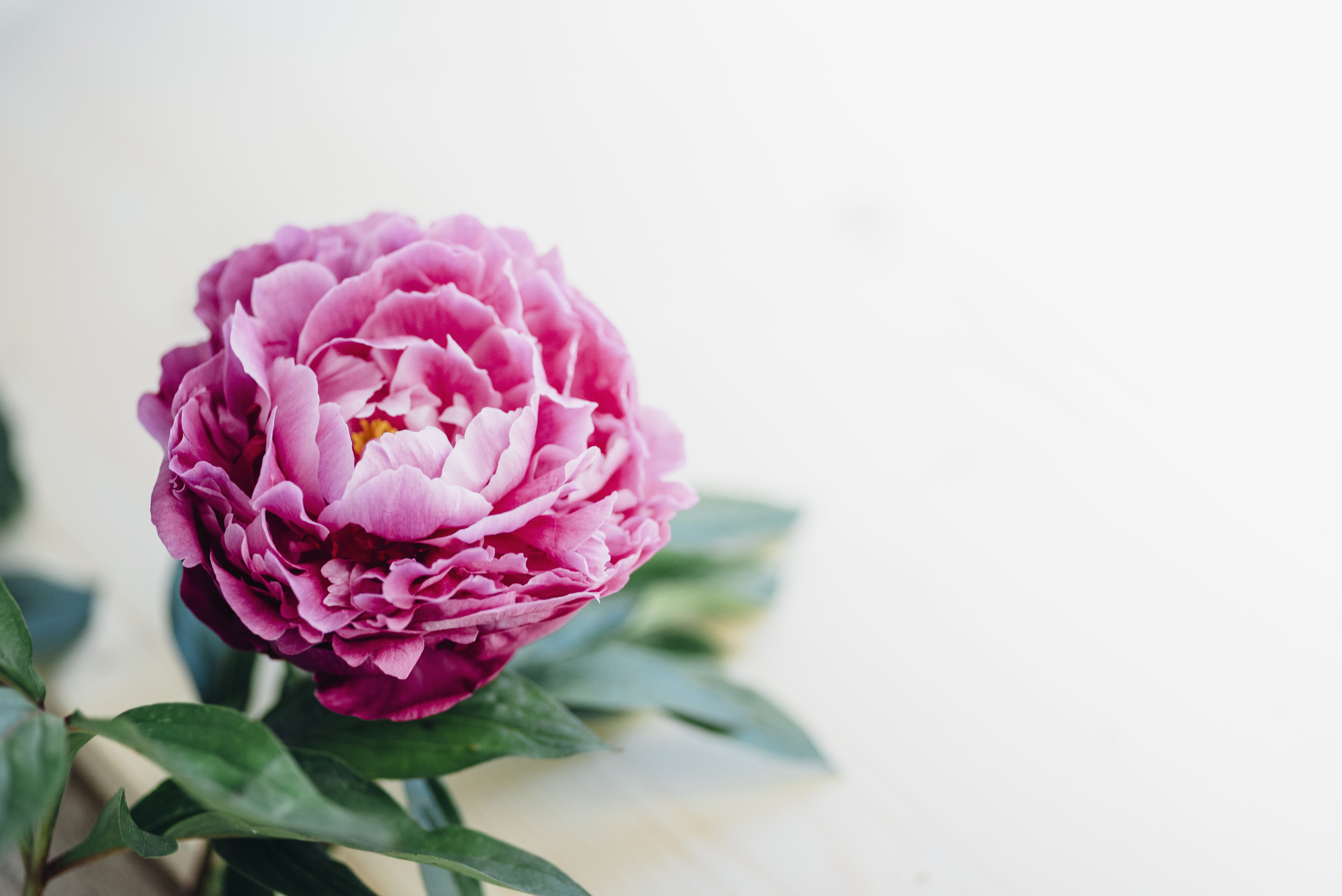 What Fertilizer to Use for Peonies | Home Guides | SF Gate