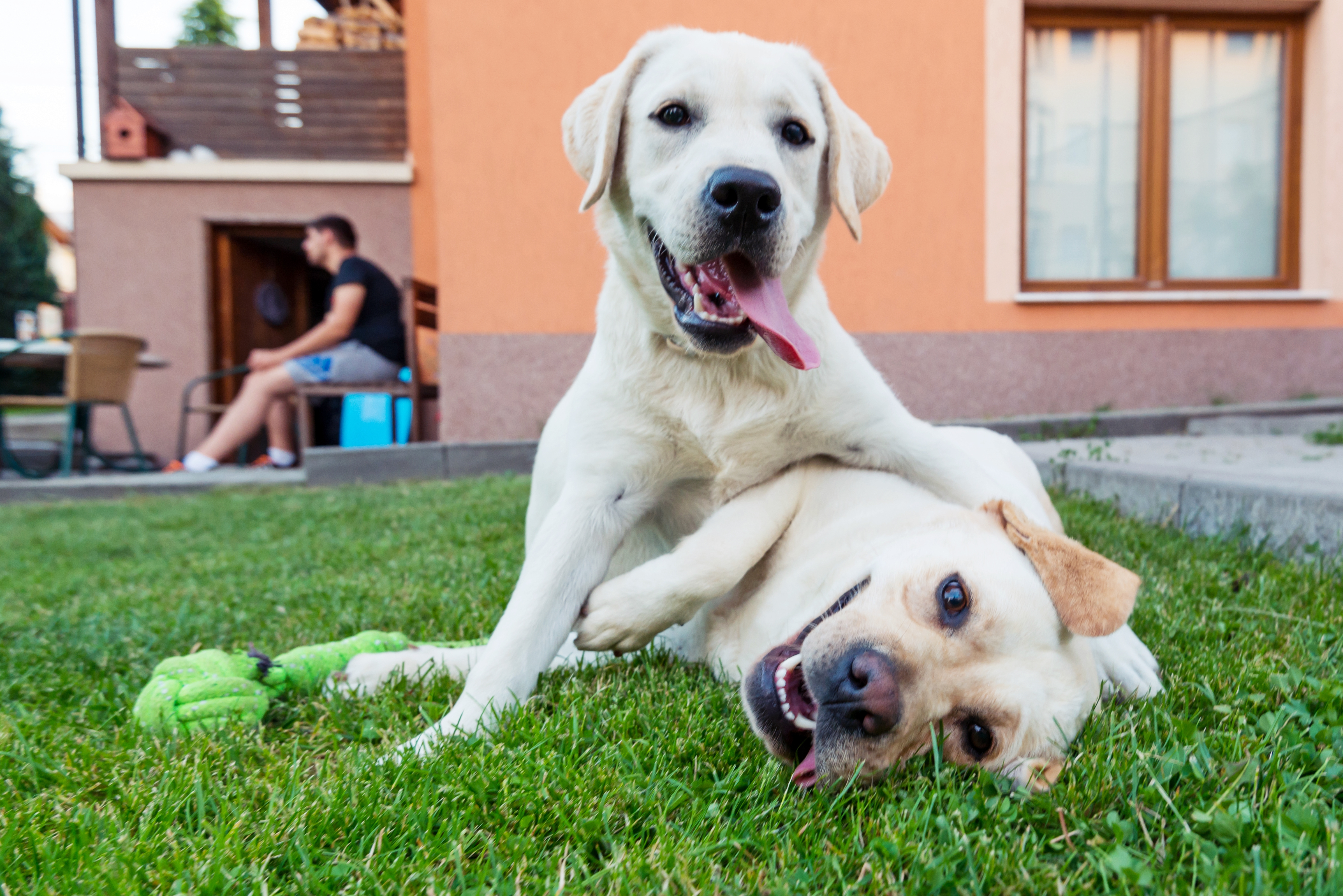 What Happens When a Mother Dog Breeds With the Son? | Cuteness
