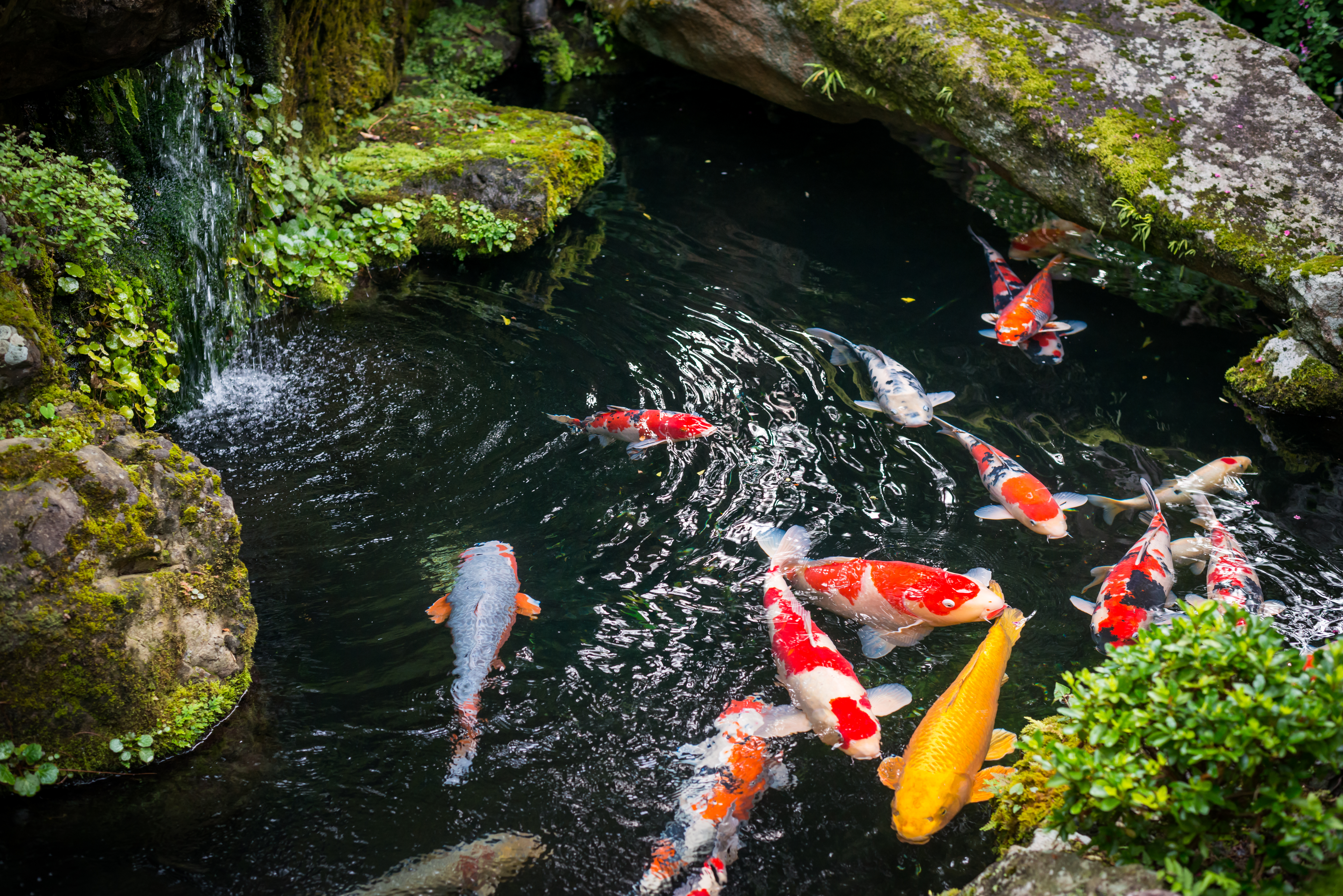 How Do Fish Get Into New Ponds?