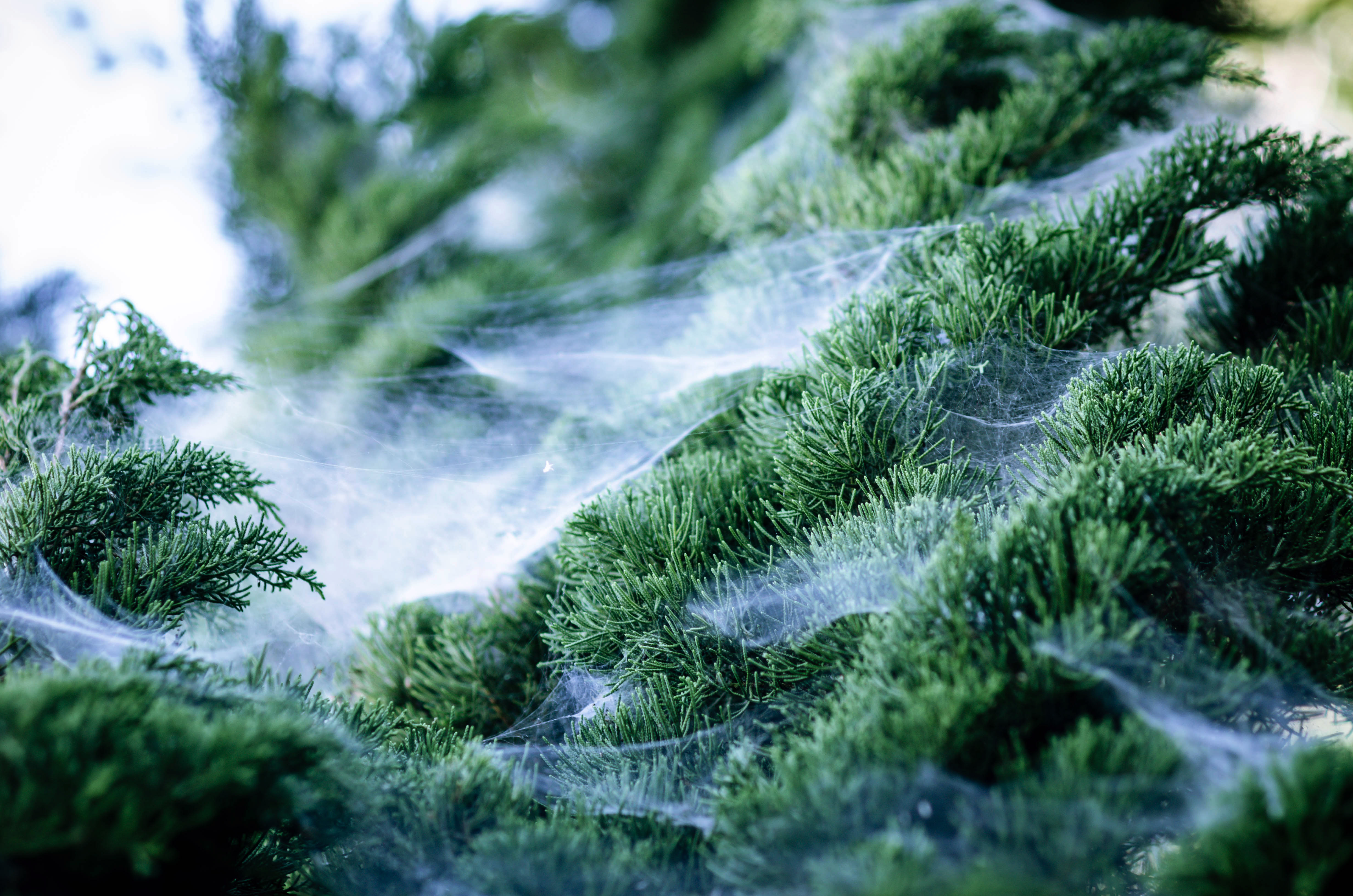 Tree Infestations With Webs | Home Guides | SF Gate