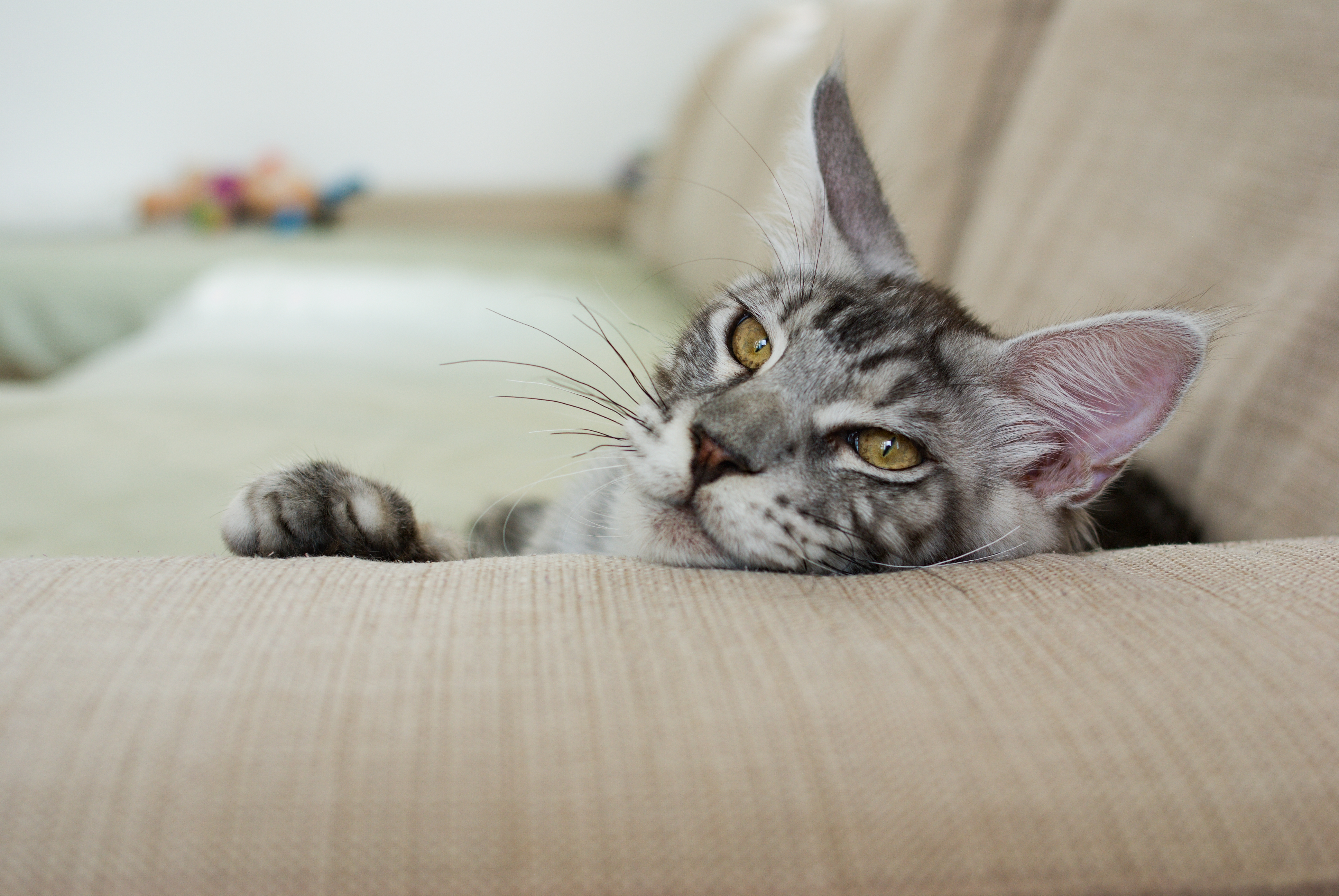 Is Your Kitty Alone Often? Look for These Signs That a Cat