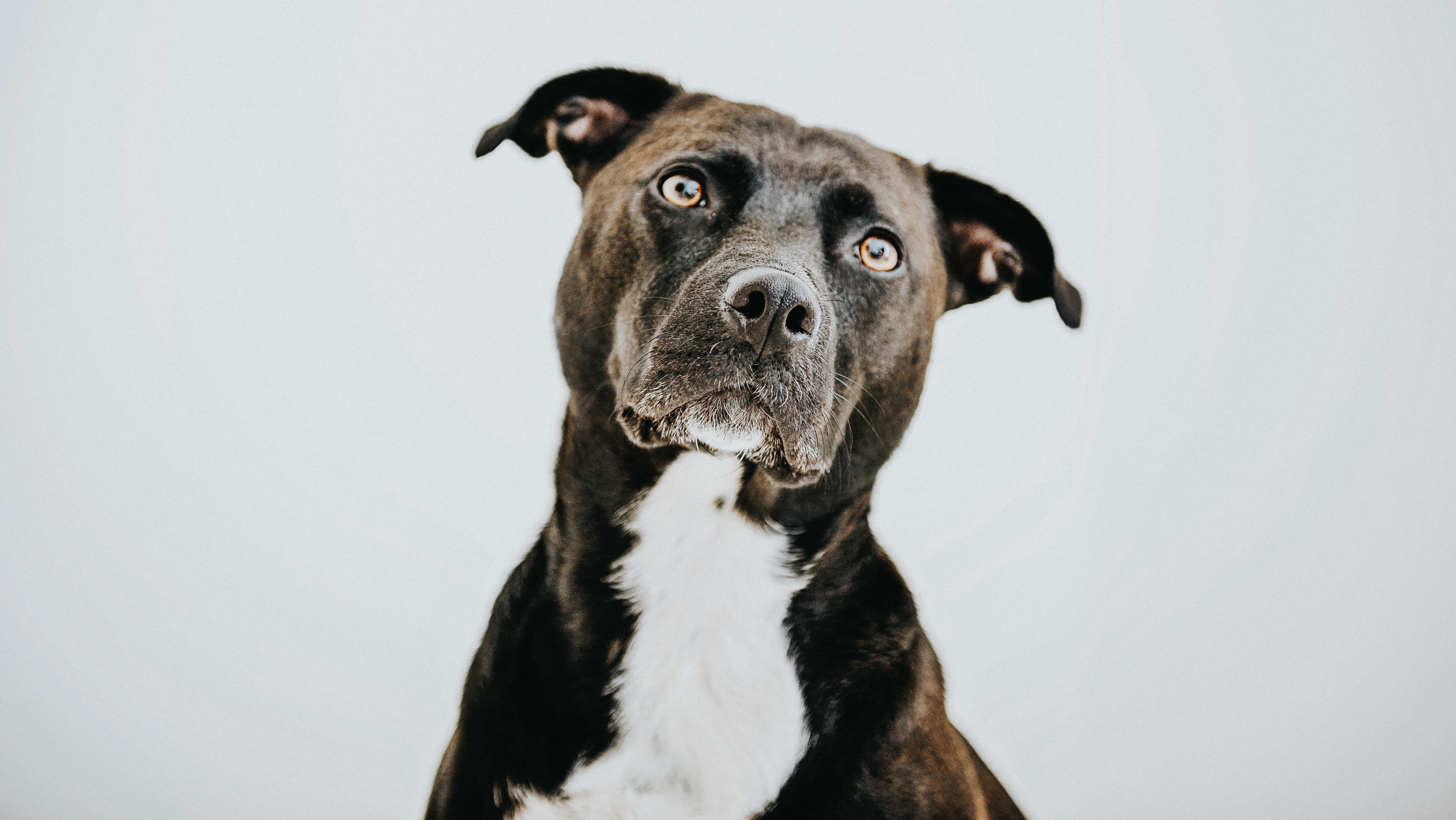 245 Strong Dog Names For Your Powerful Pooch | Cuteness