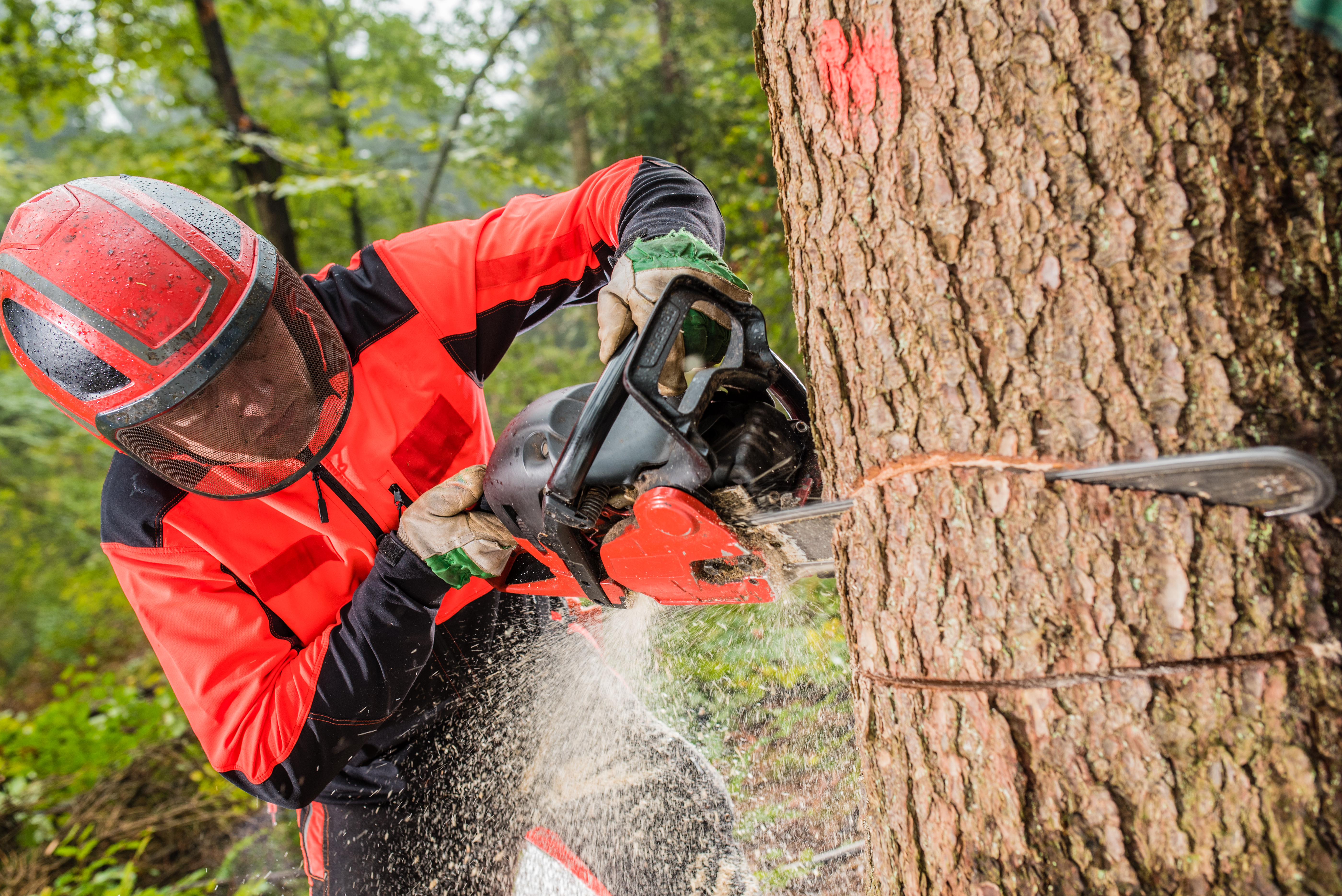 What Is the Gas to Oil Mixture Ratio for Chain Saws? | Home Guides