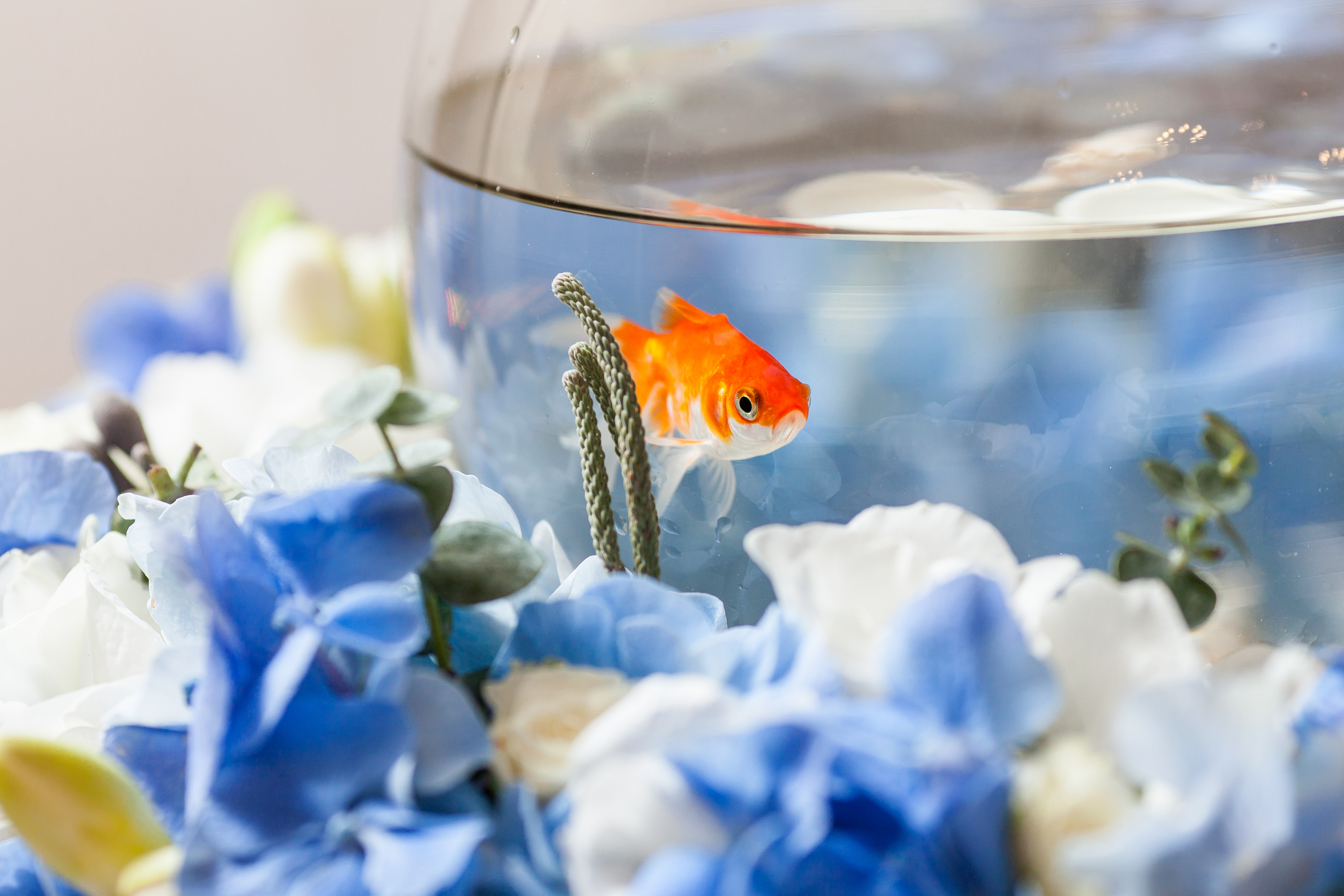 Ideas for Science Fair Projects on Fish