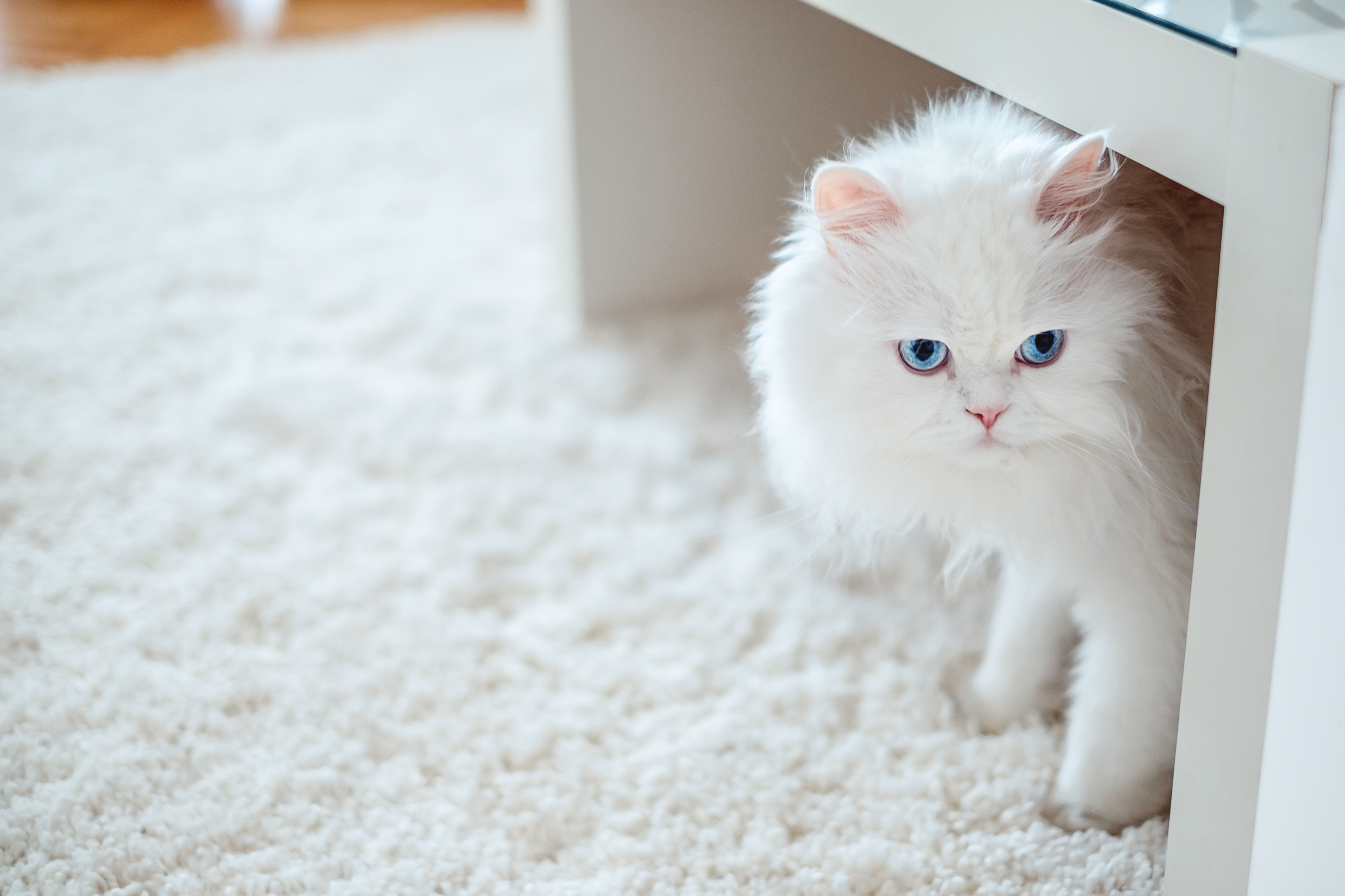 How to Stop a Cat From Pooping on the Carpet | Cuteness