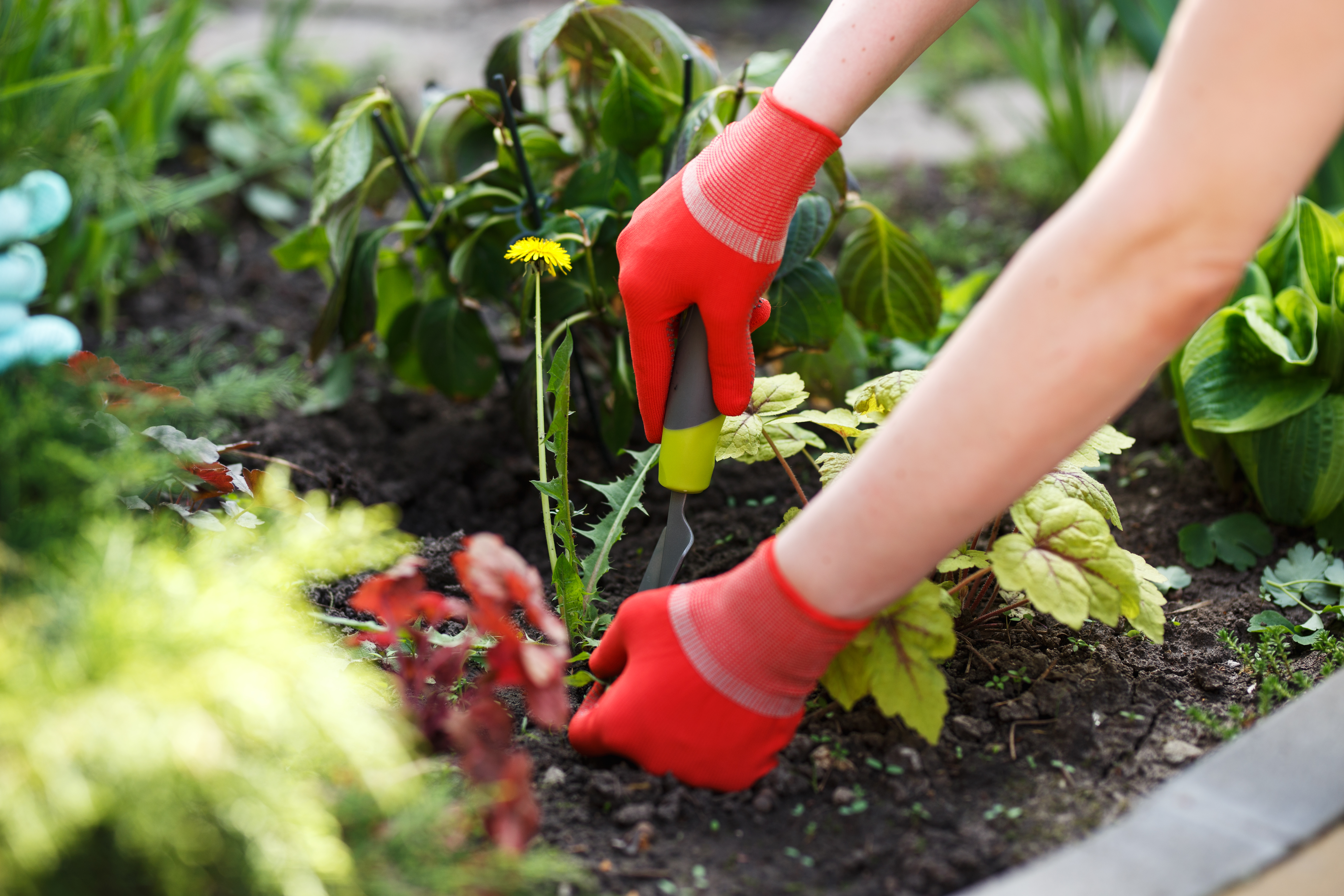 Weed Control With Bleach or Vinegar | Home Guides | SF Gate