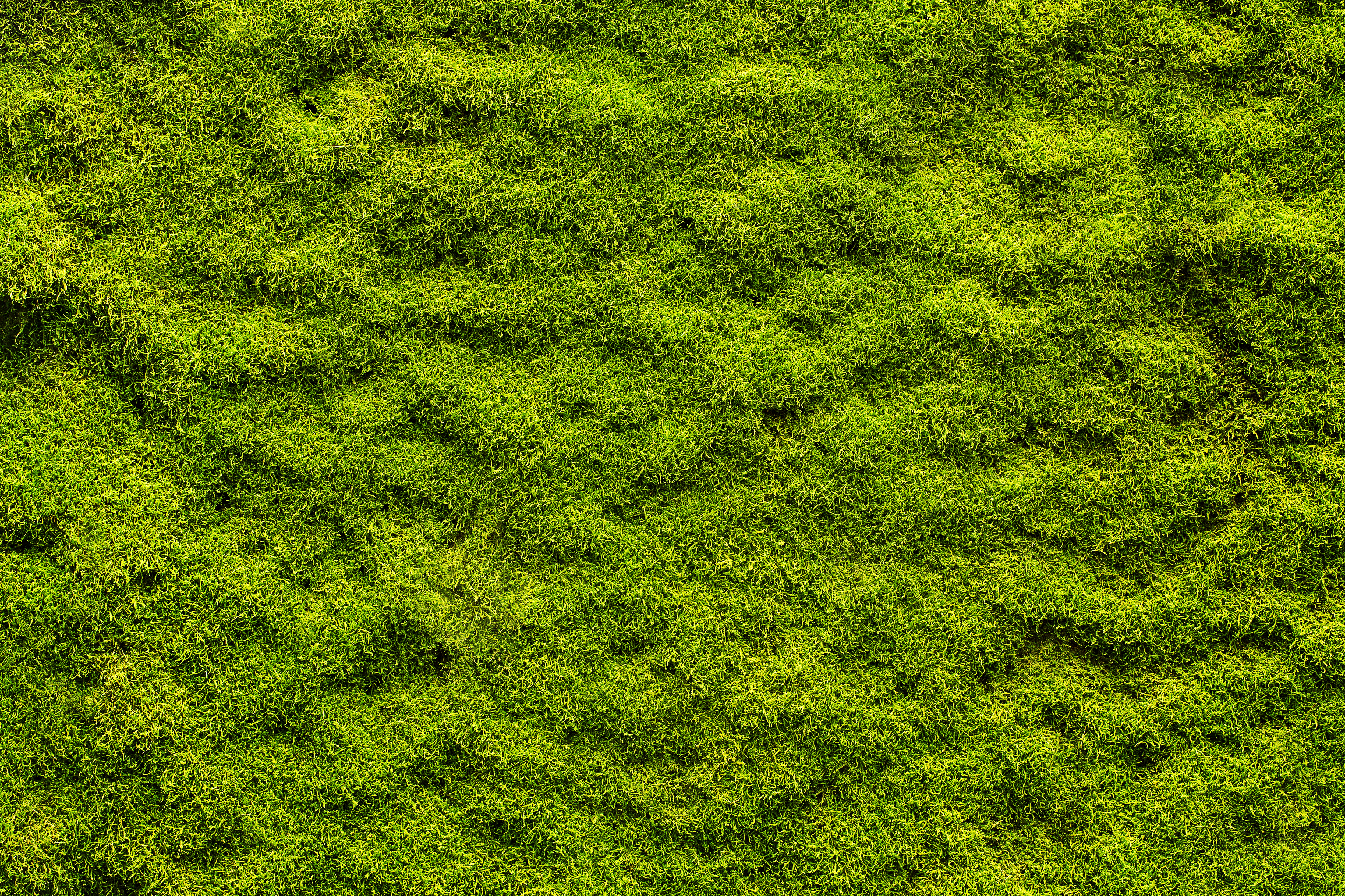 Peat Moss on Grass | Home Guides | SF Gate